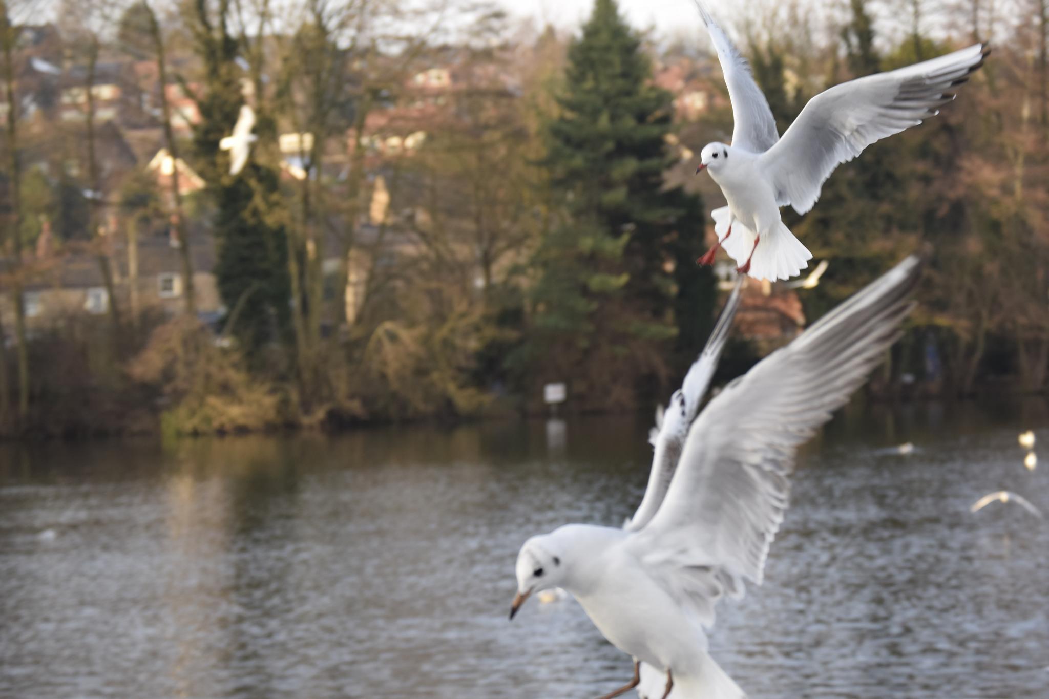 Seagulls Flying by KSurelia