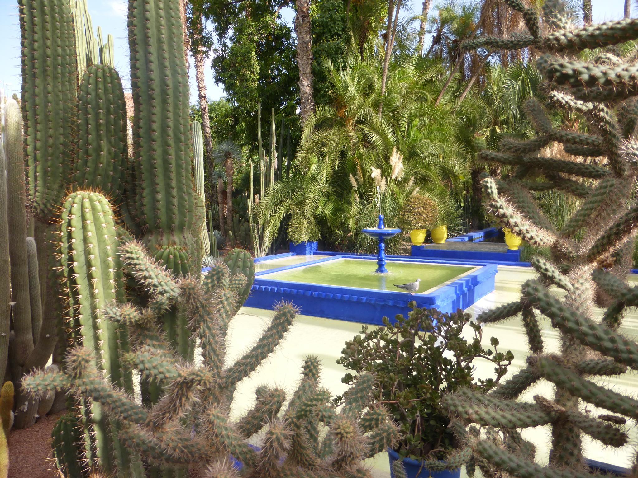 Jardin De Mojorelle by KSurelia