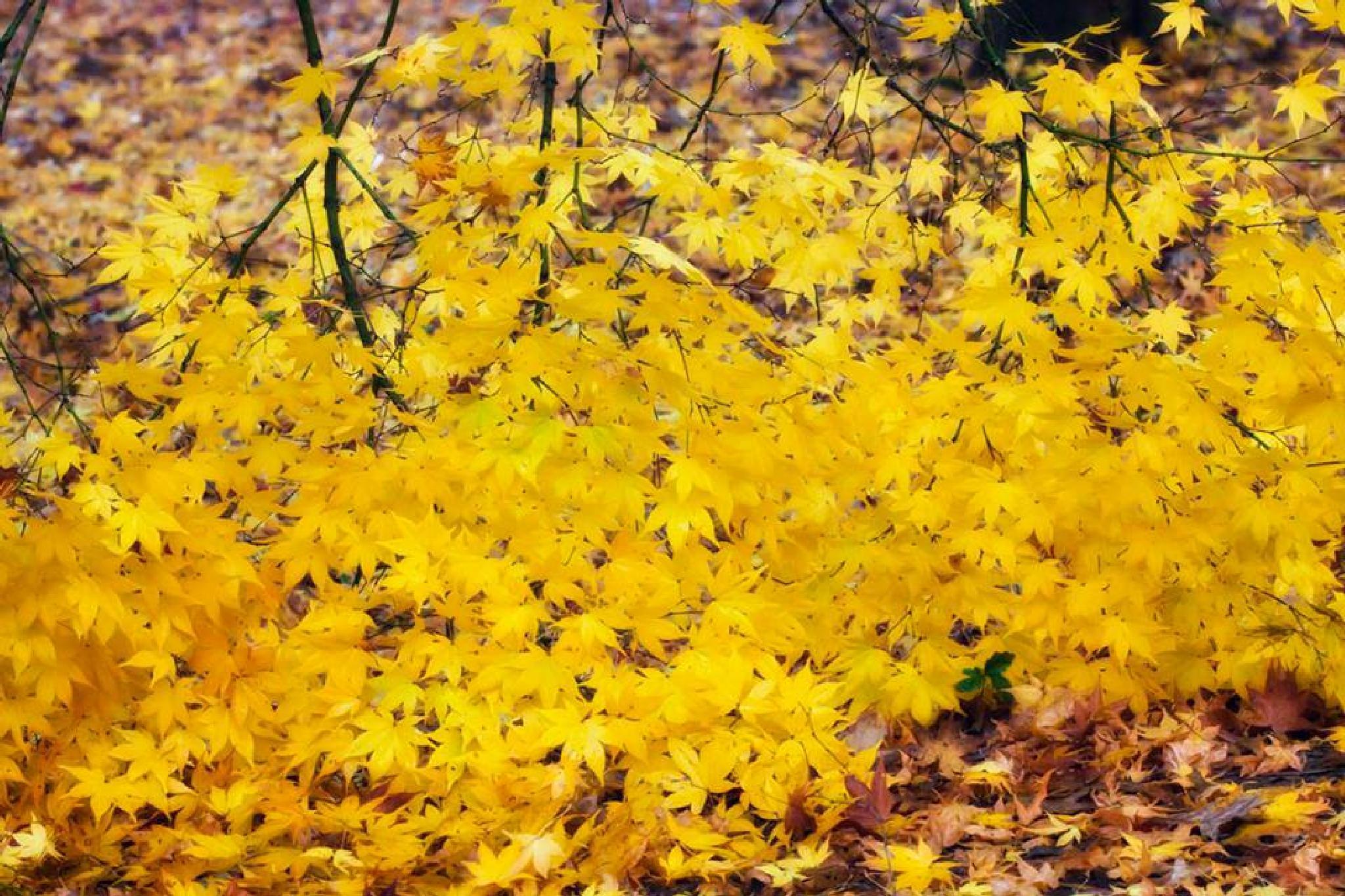 Yellow by tatiana71