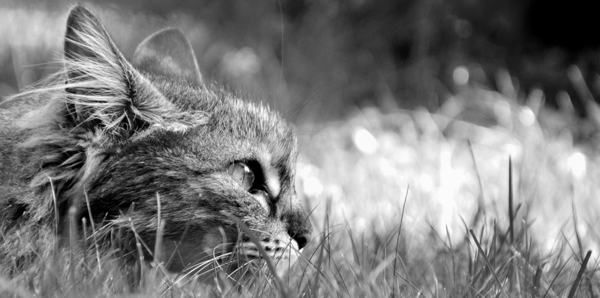 I see you... by Carola Grondona