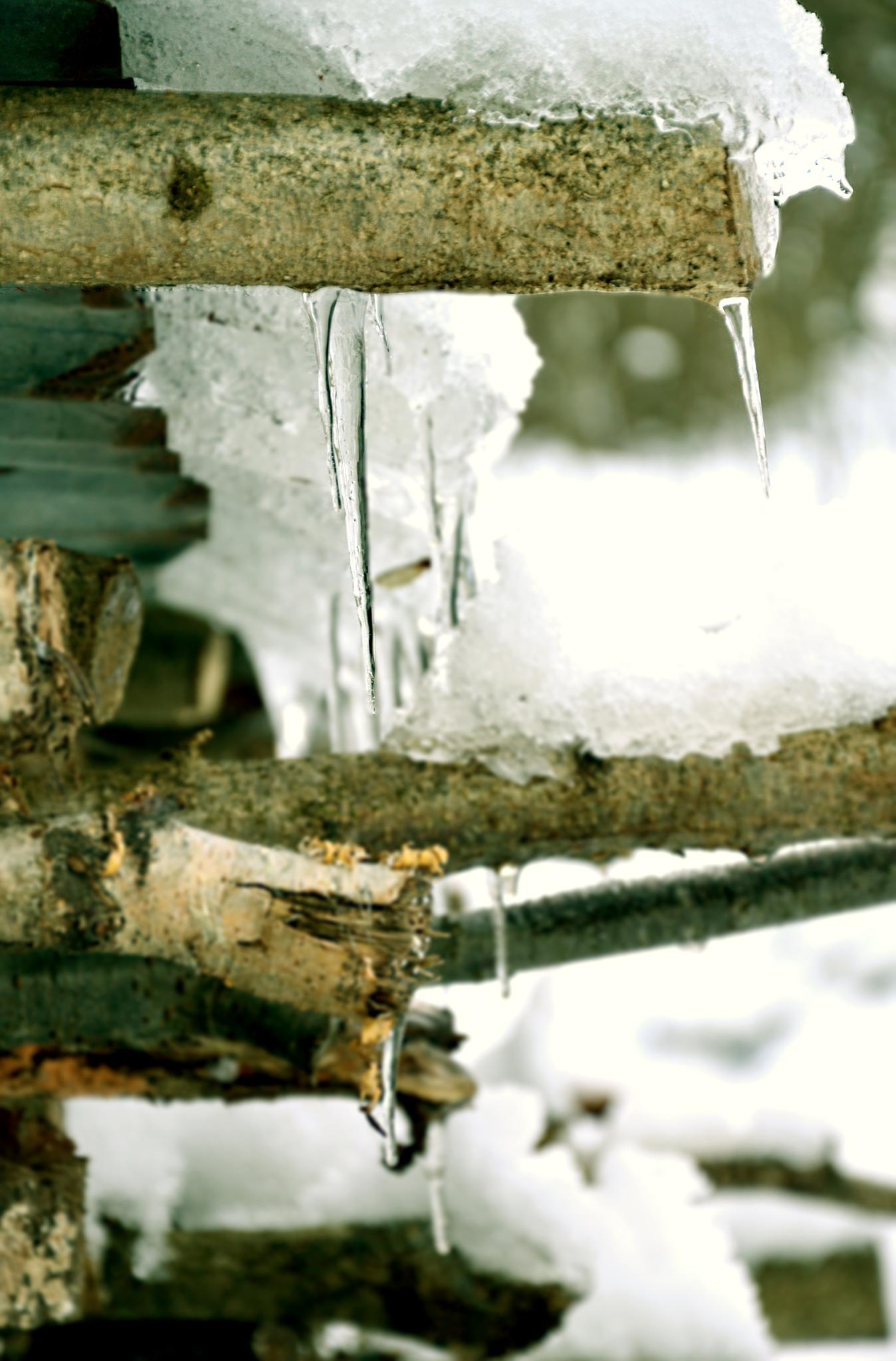 * Ice * by Carola Grondona