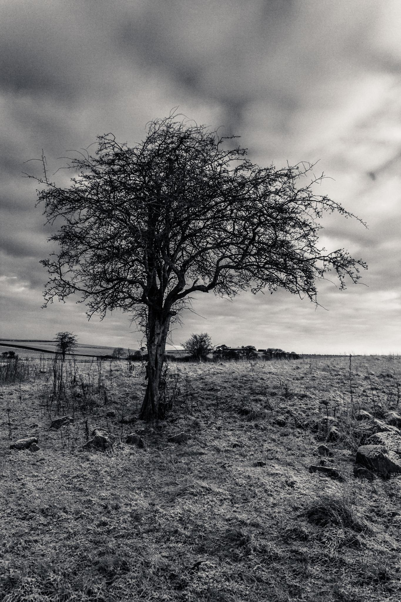 Lonely Tree by Jonathan Borland