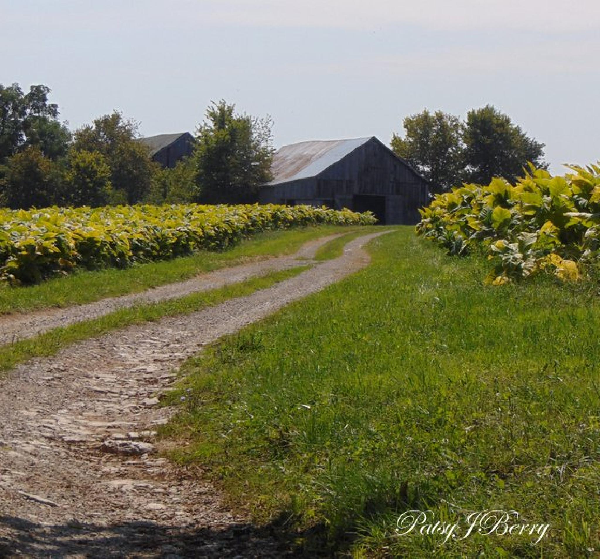 Tobacco road.....Kentucky  by Kat
