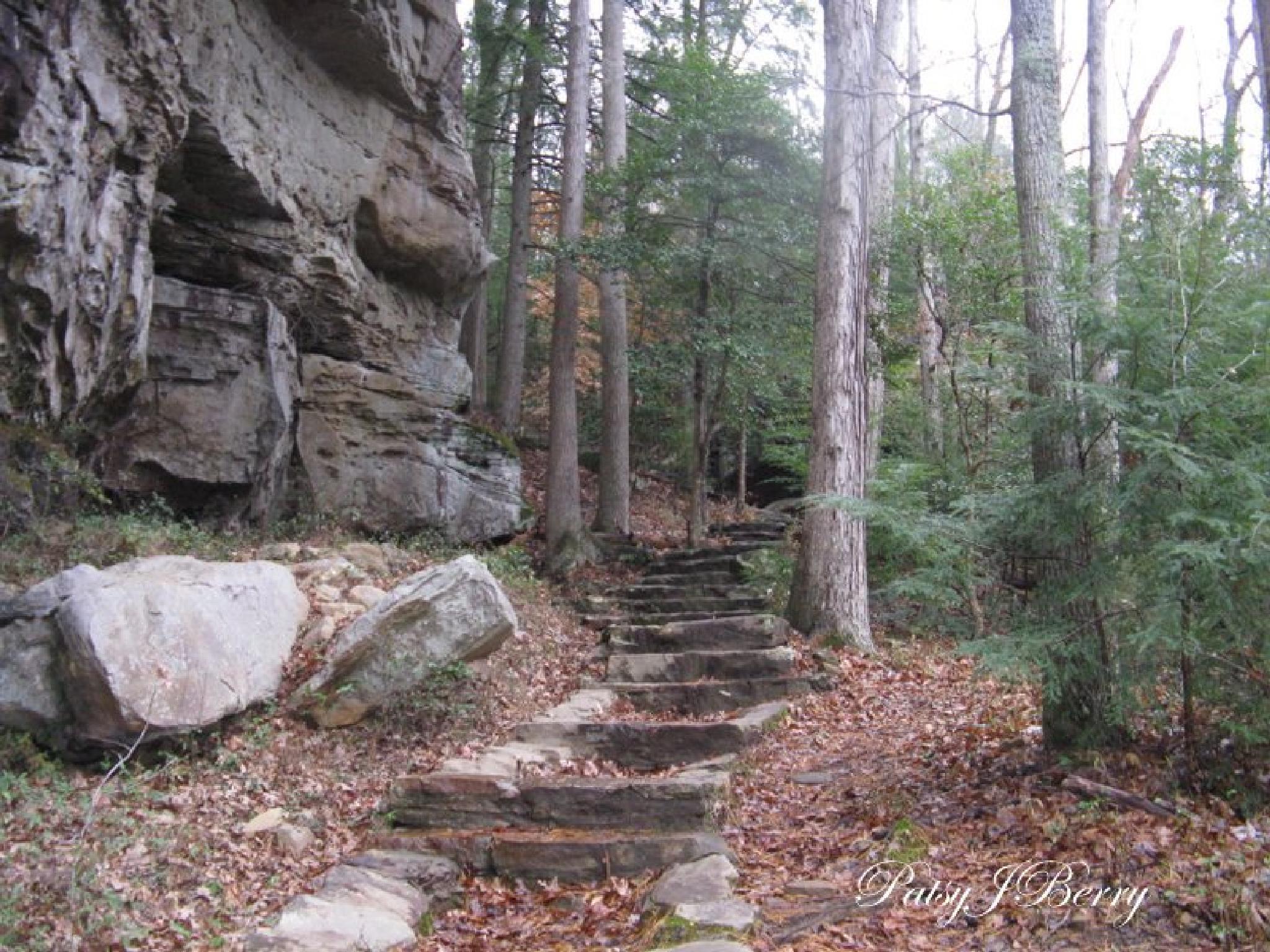 Cumberland Falls trail by Kat
