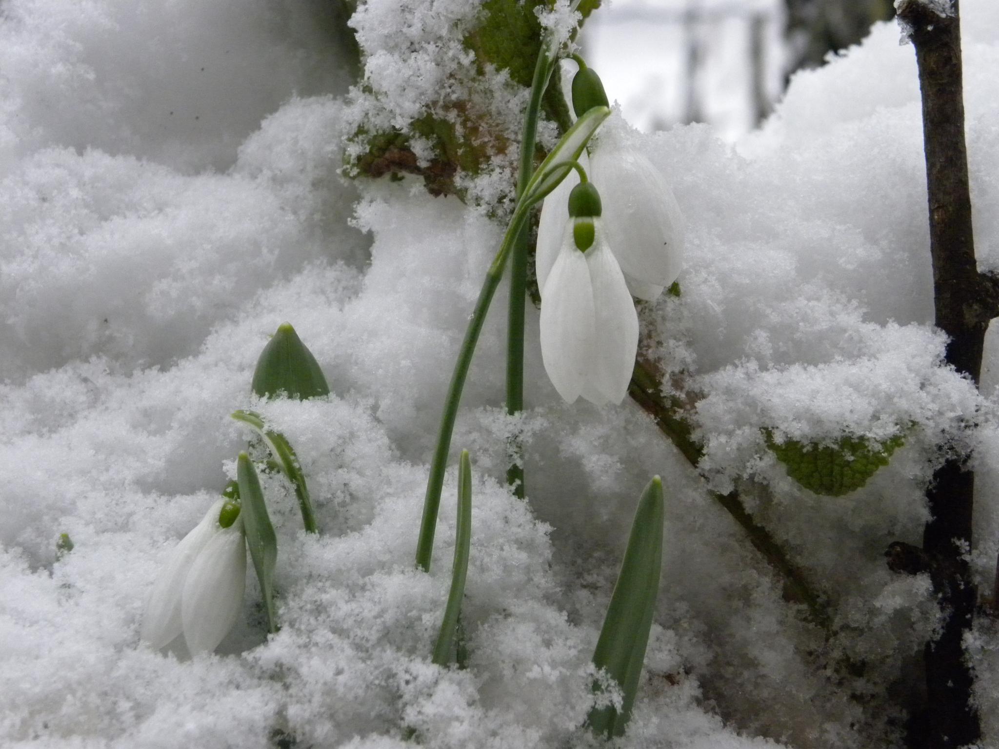 snow by rosici.miroslav