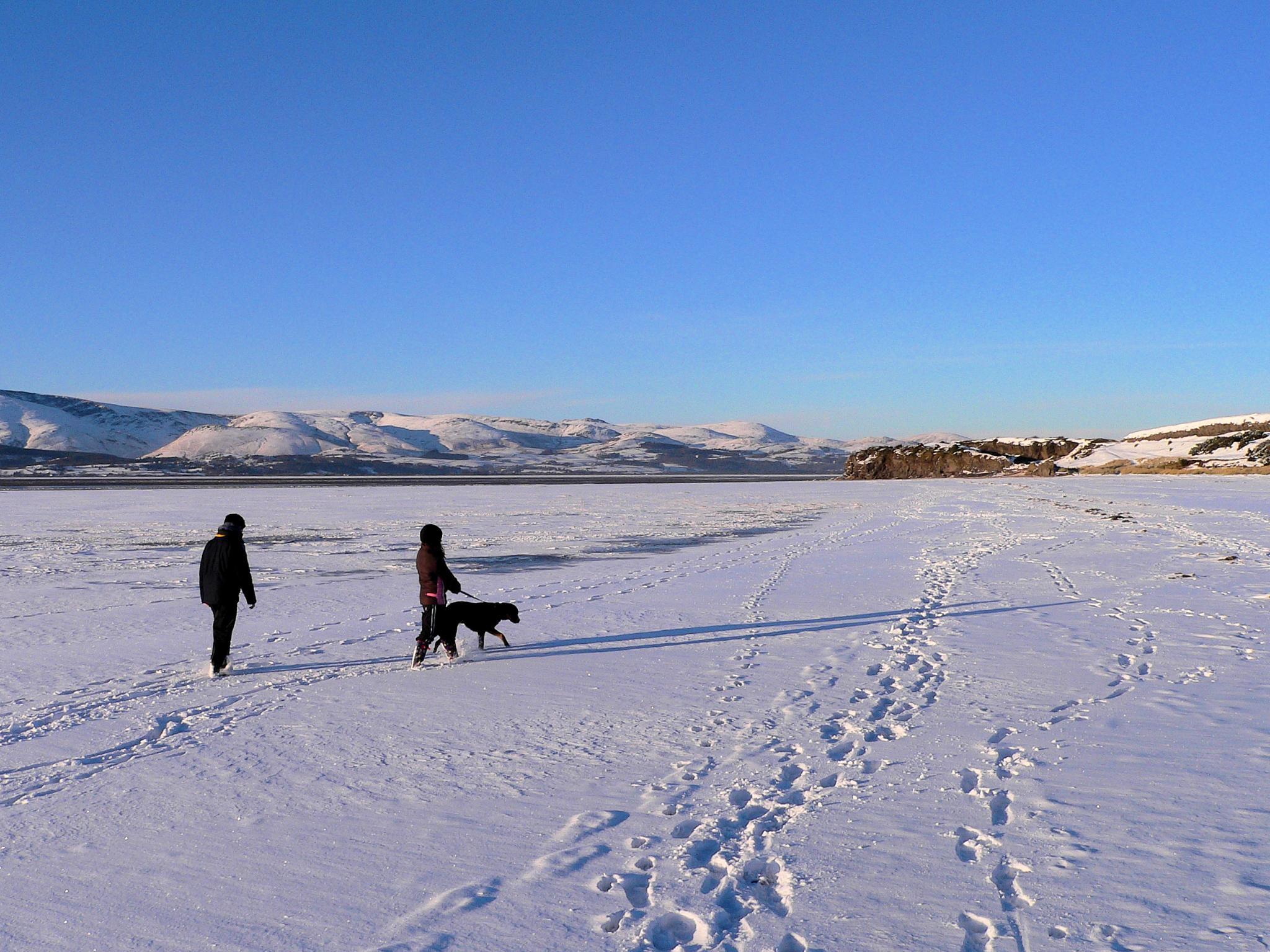 Dog walk by Matt Slater