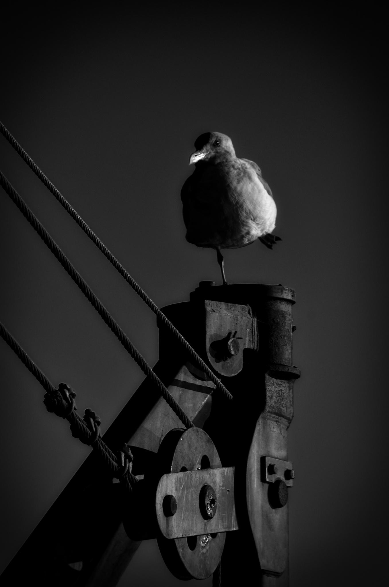 Gull by Merle Layden