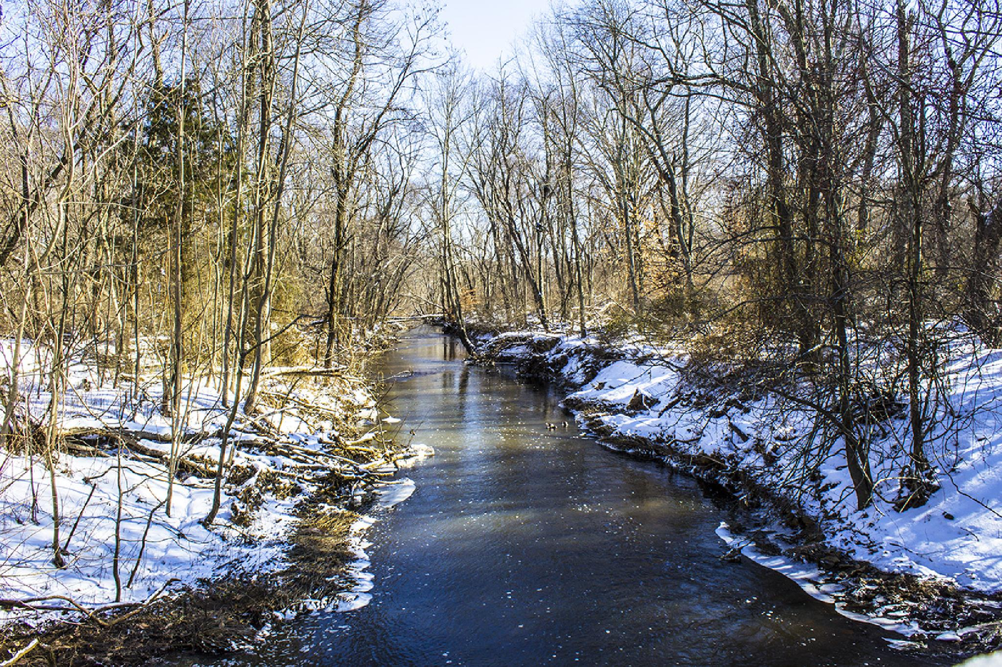Winter Stream by Daniel Franklin