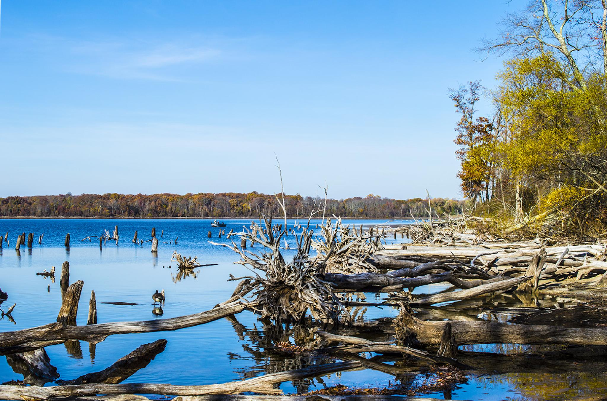 Lake of Stumps by Daniel Franklin