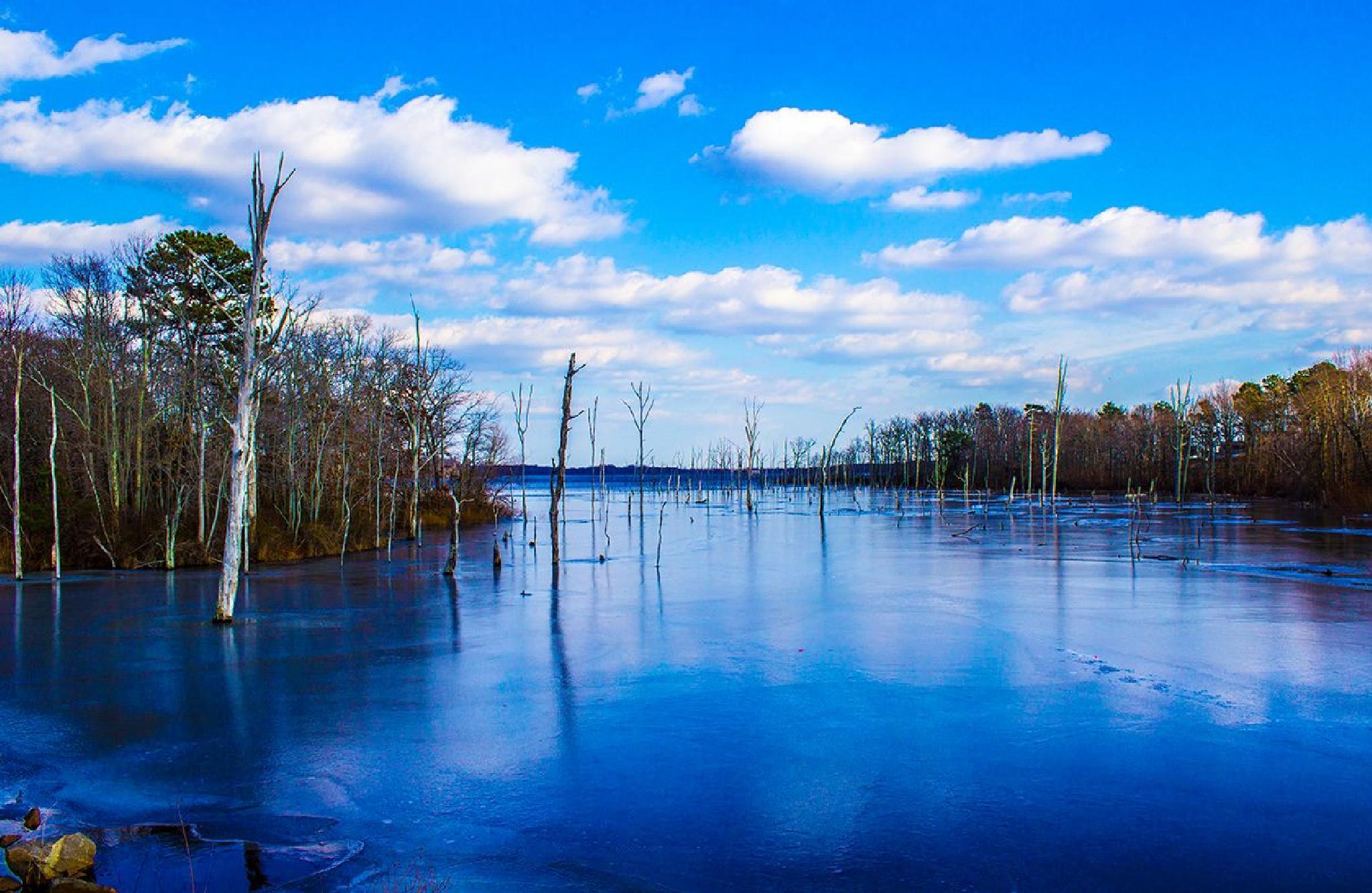 Manasquan Reservoir. by Daniel Franklin
