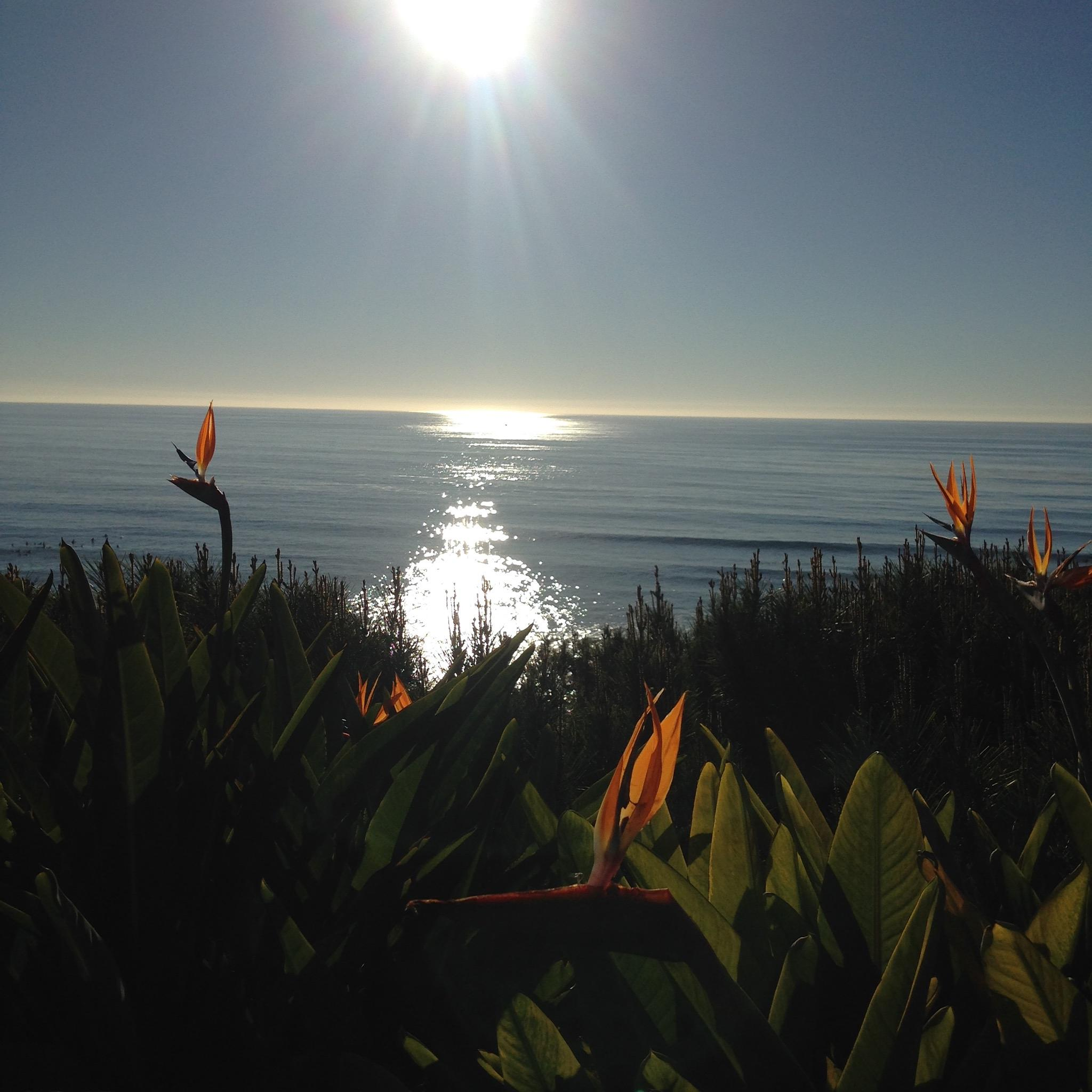 Pacific birds of paradise by jane.guy.moore