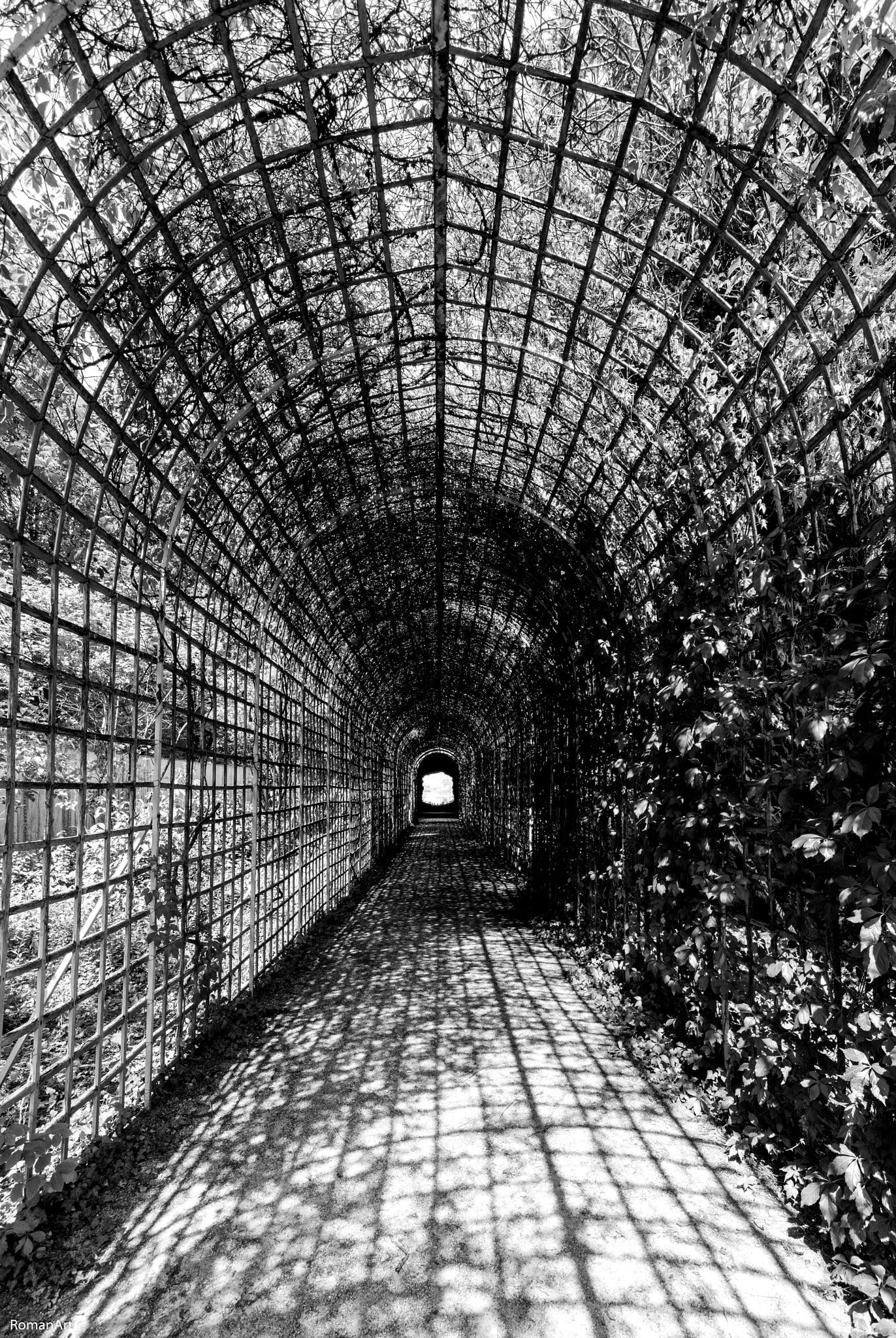 Spiderweb 2 by roman.maurer.5