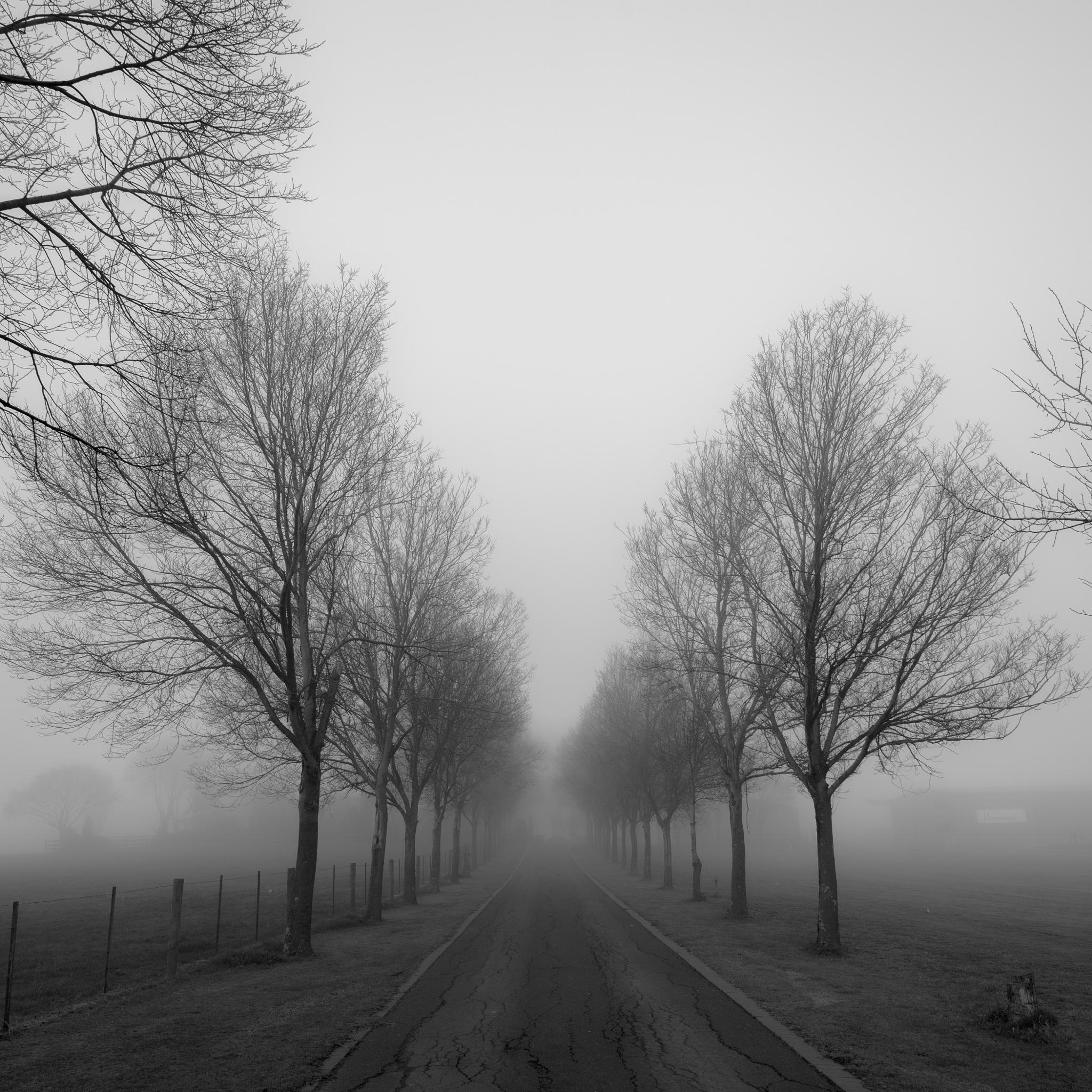 Foggy Day by Peter Nguyen