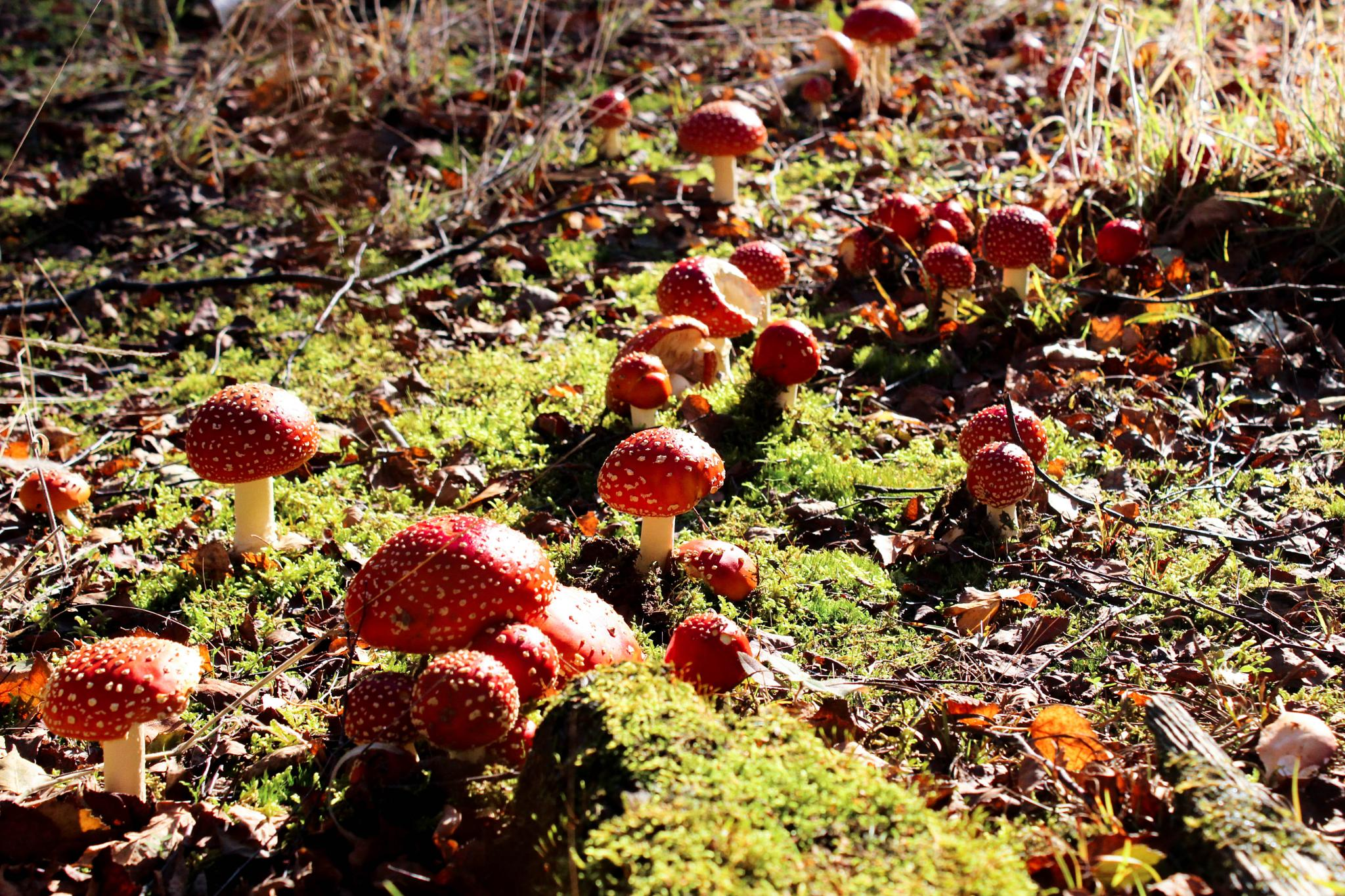 magical fungi in the woods by phil.newman.75