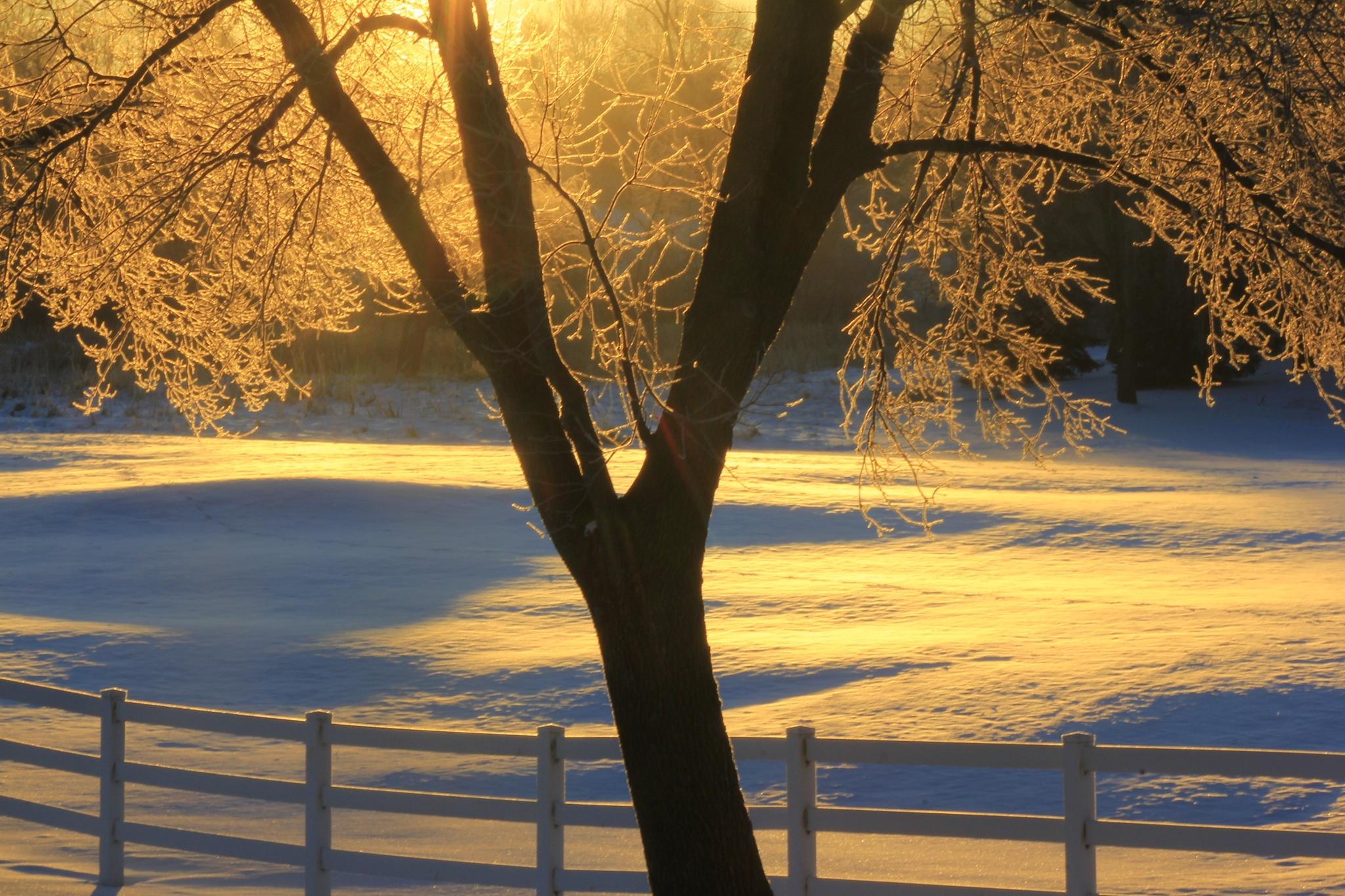 Golden snow by matthew.pastick
