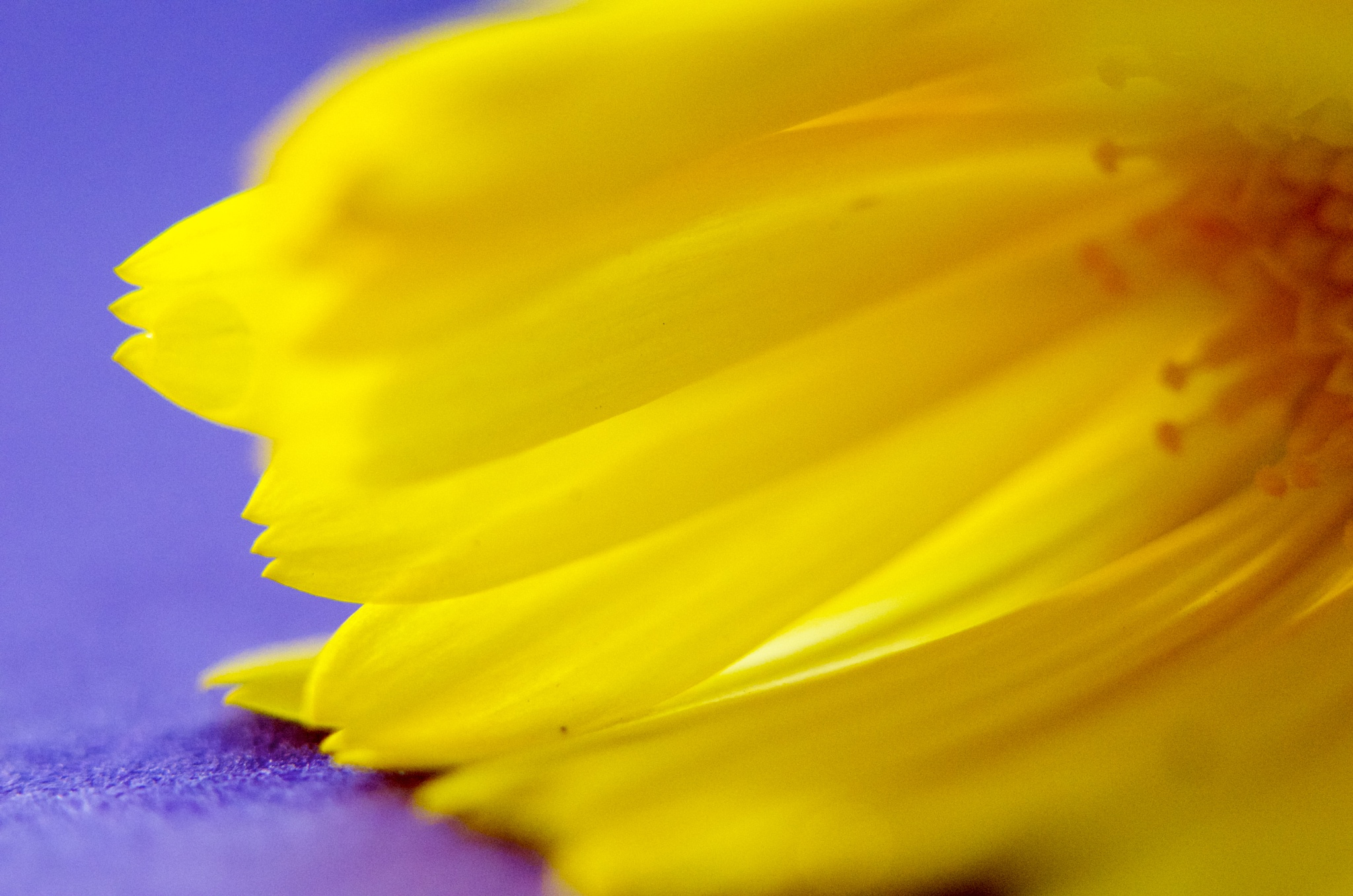 Yellow on purple by pam.simonsson