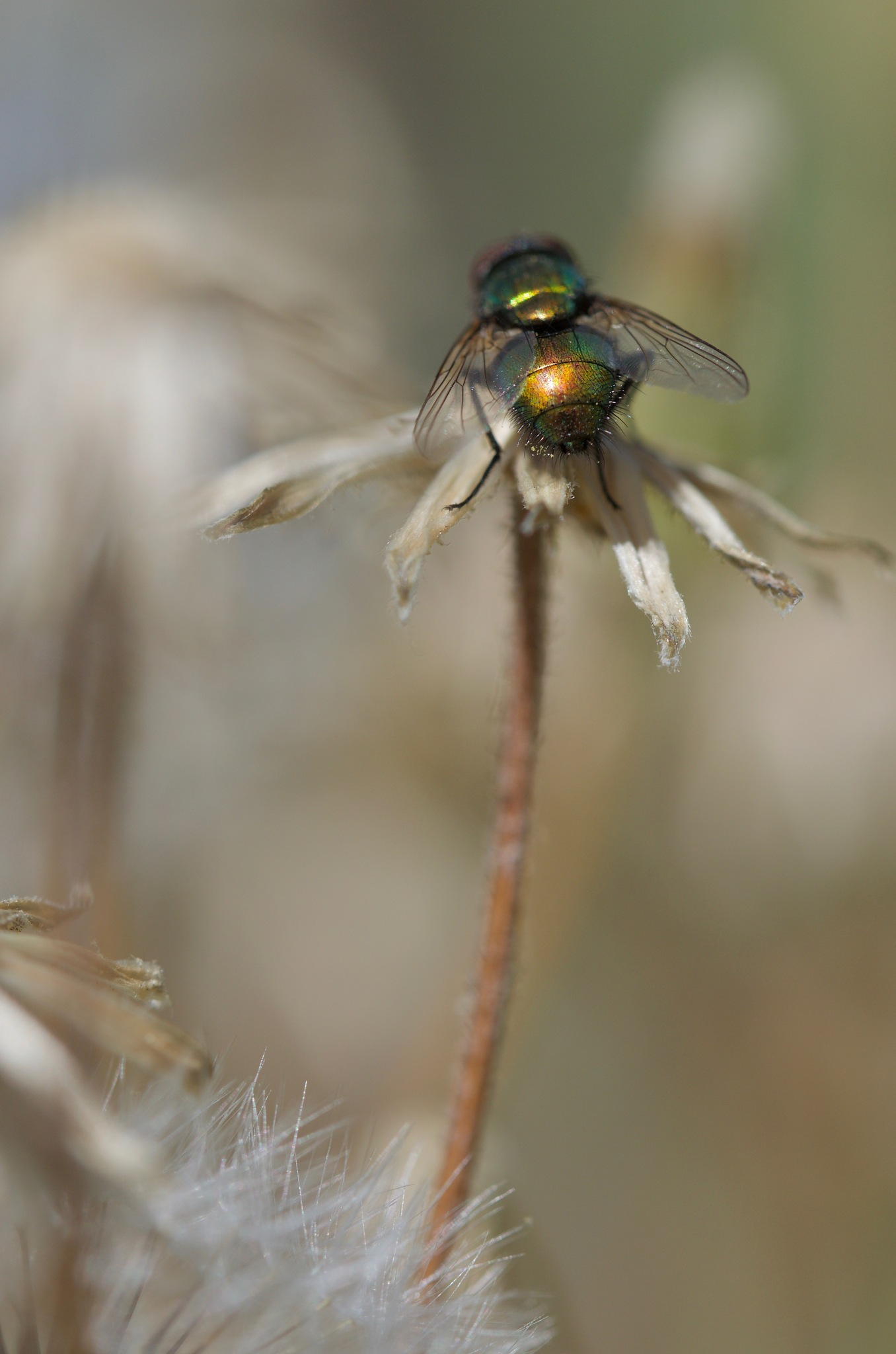 Mr Fly rear! by pam.simonsson