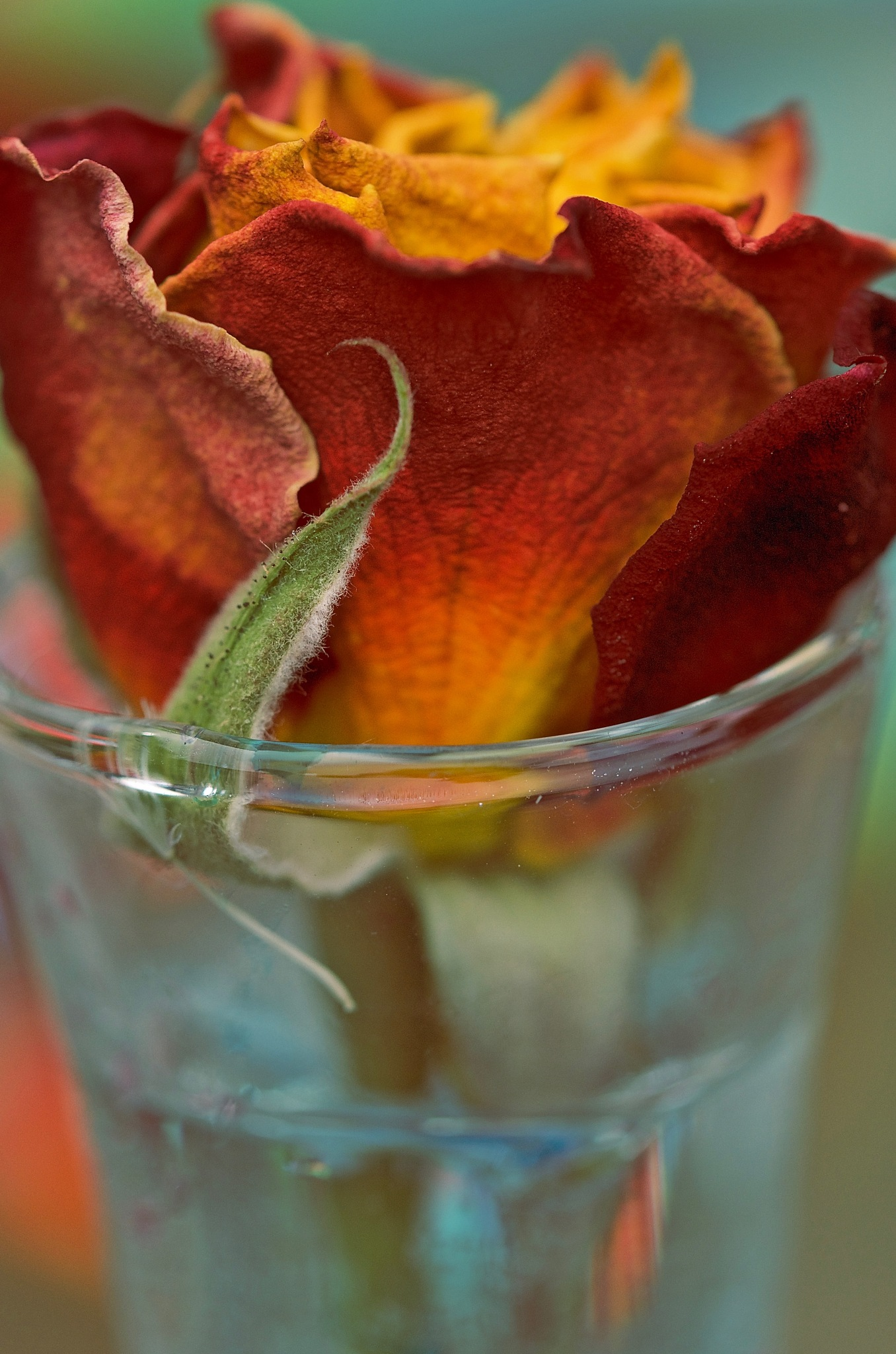 Old rose in glass by pam.simonsson