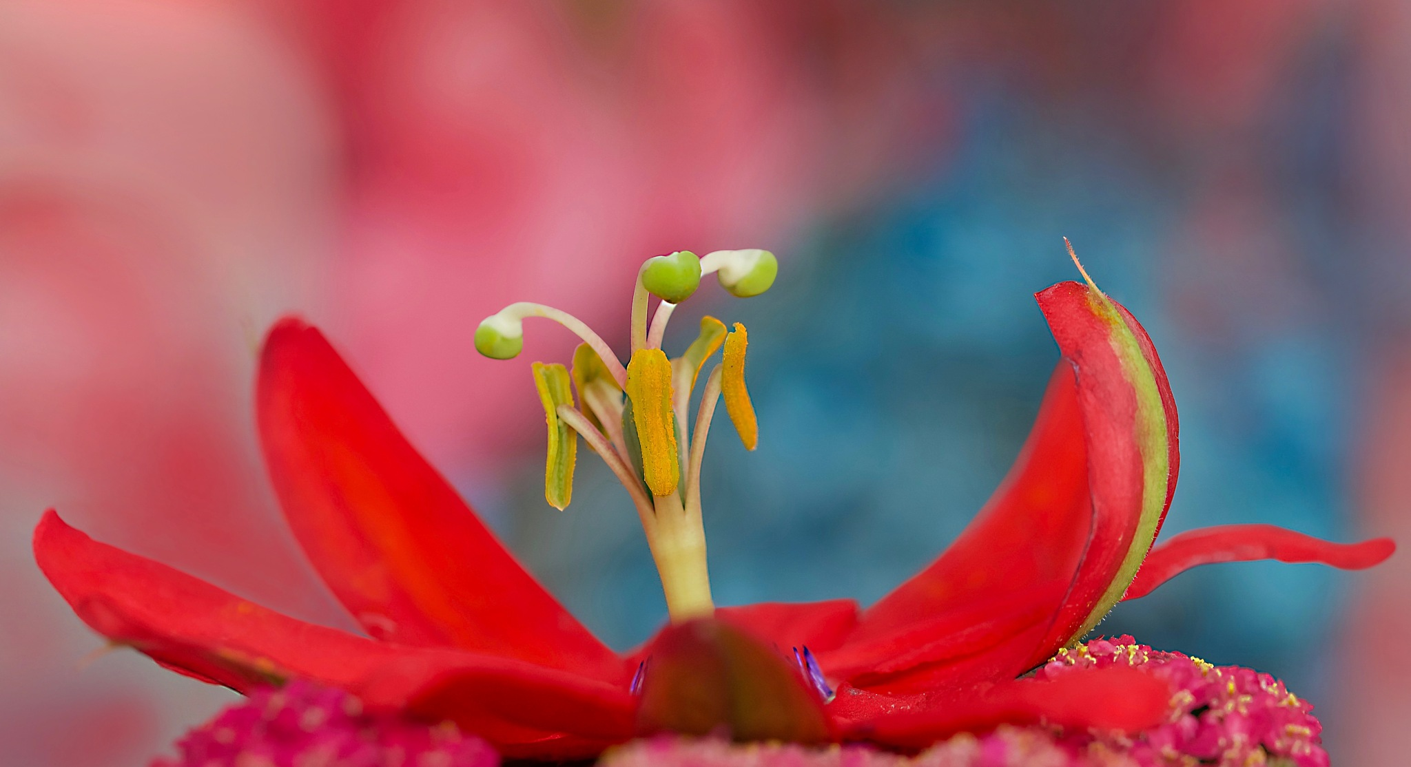 red passion by pam.simonsson