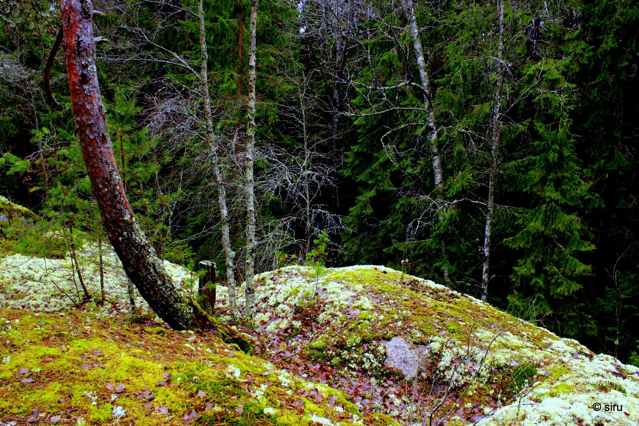 Finnish nature 2 by siru tuominen