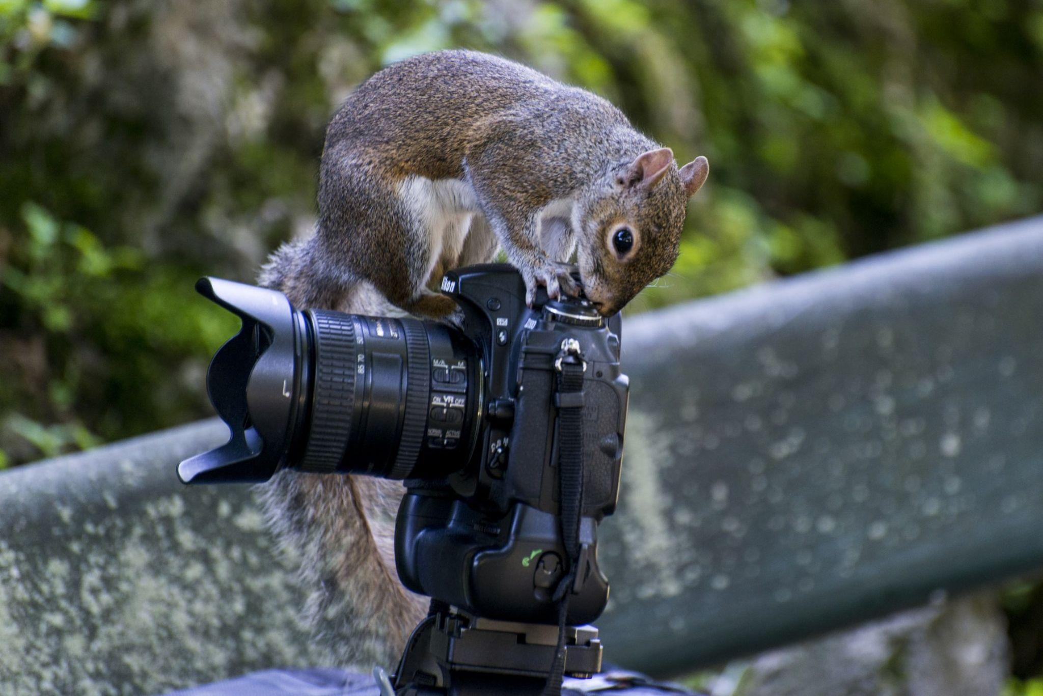 Squirrel Nikonista  by dariosperone