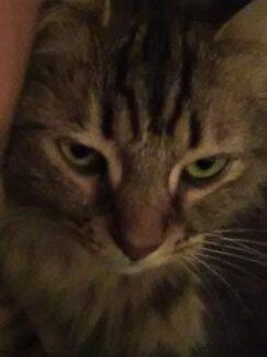 Gentle boy by kathy.friend.meow