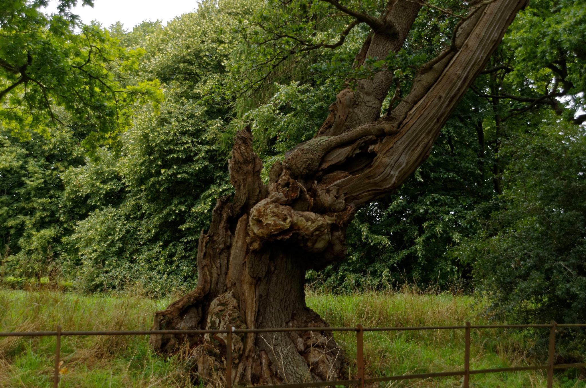 tree by paulrobin.andrews