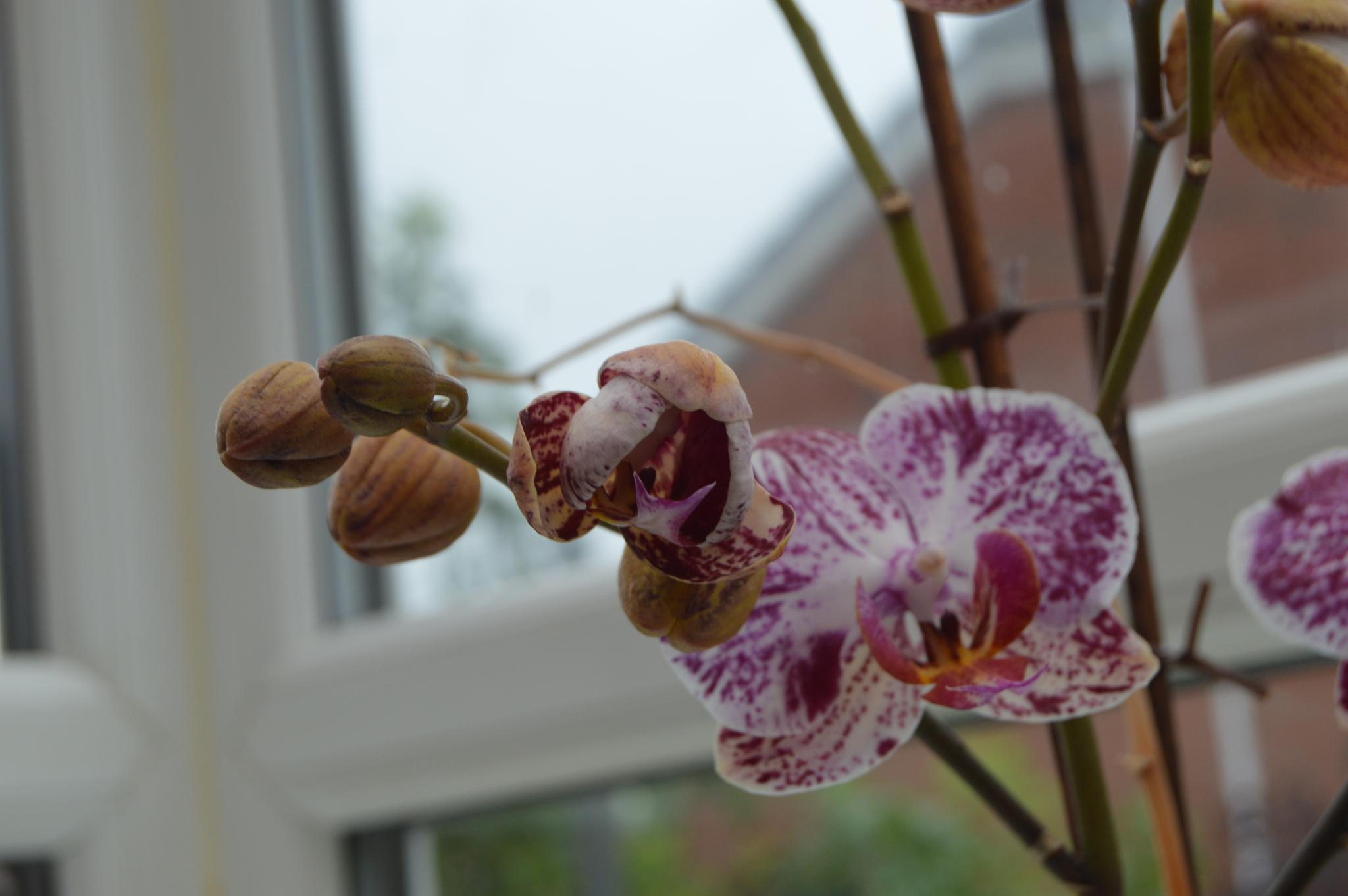 orchid by phil.poole.507