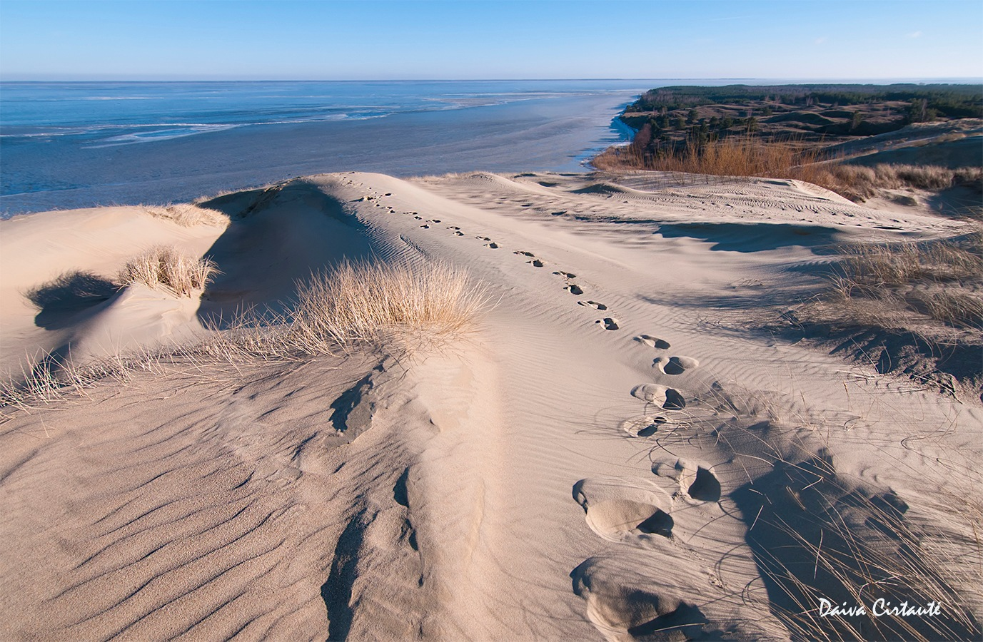 Dead dunes by Daiva Cirtautė
