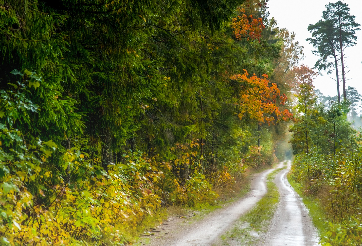 What the tired autumn rain is talking ... by Daiva Cirtautė