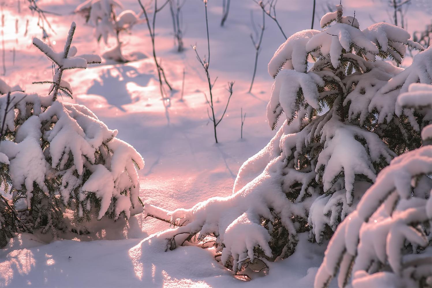 Morning light by Daiva Cirtautė