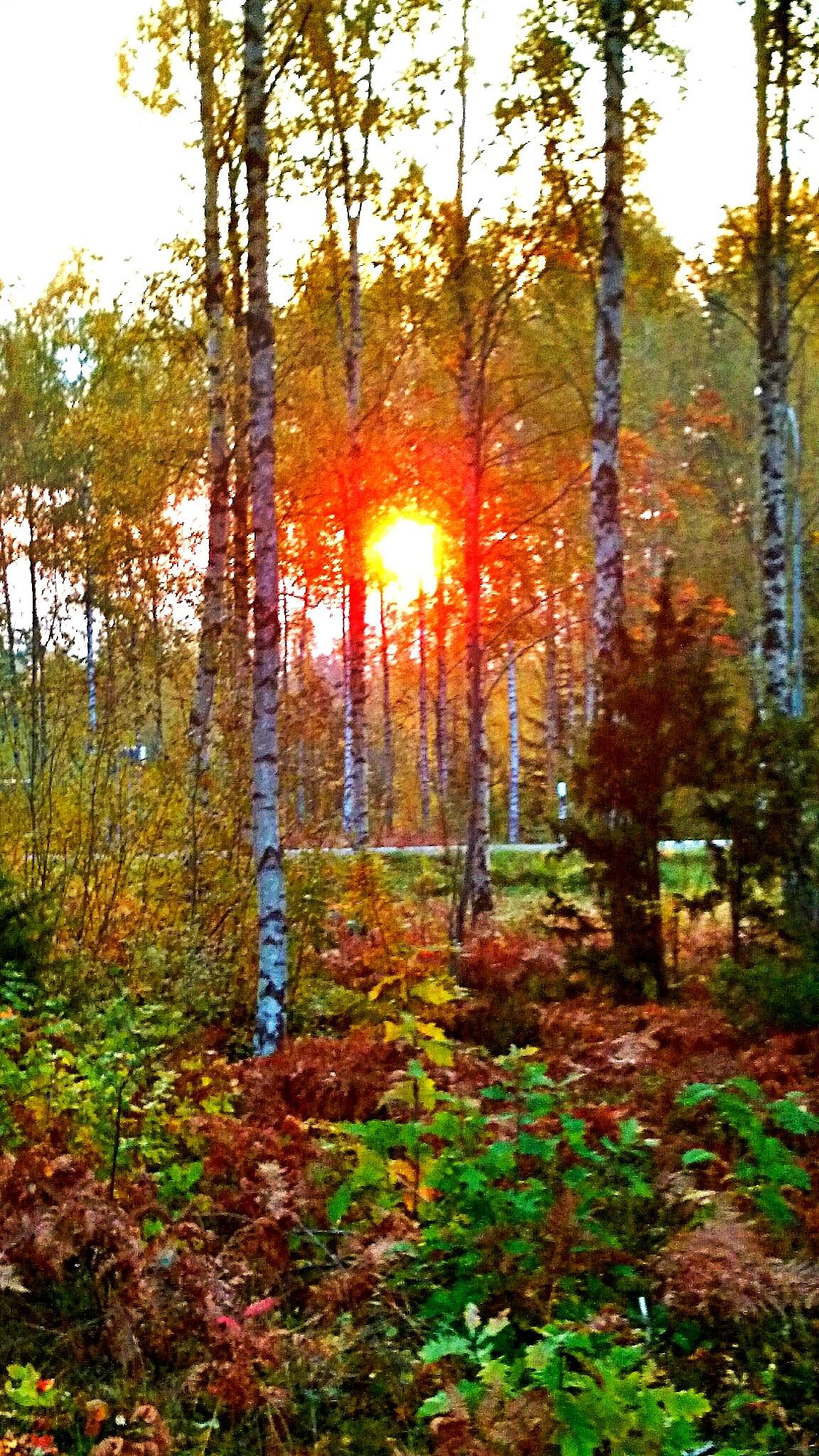 A beautiful sunrise  by Sherlina