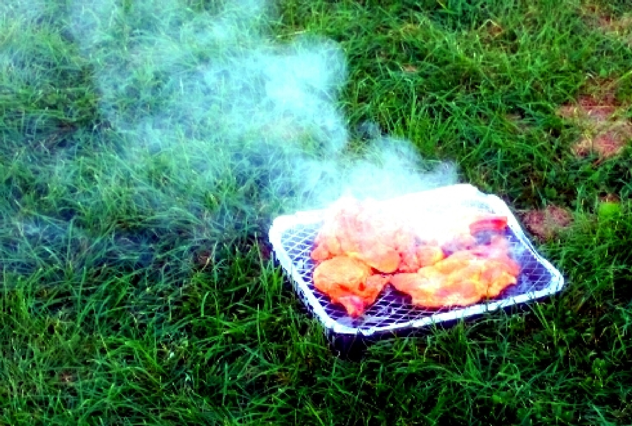 barbecue on the grass.  by Sherlina