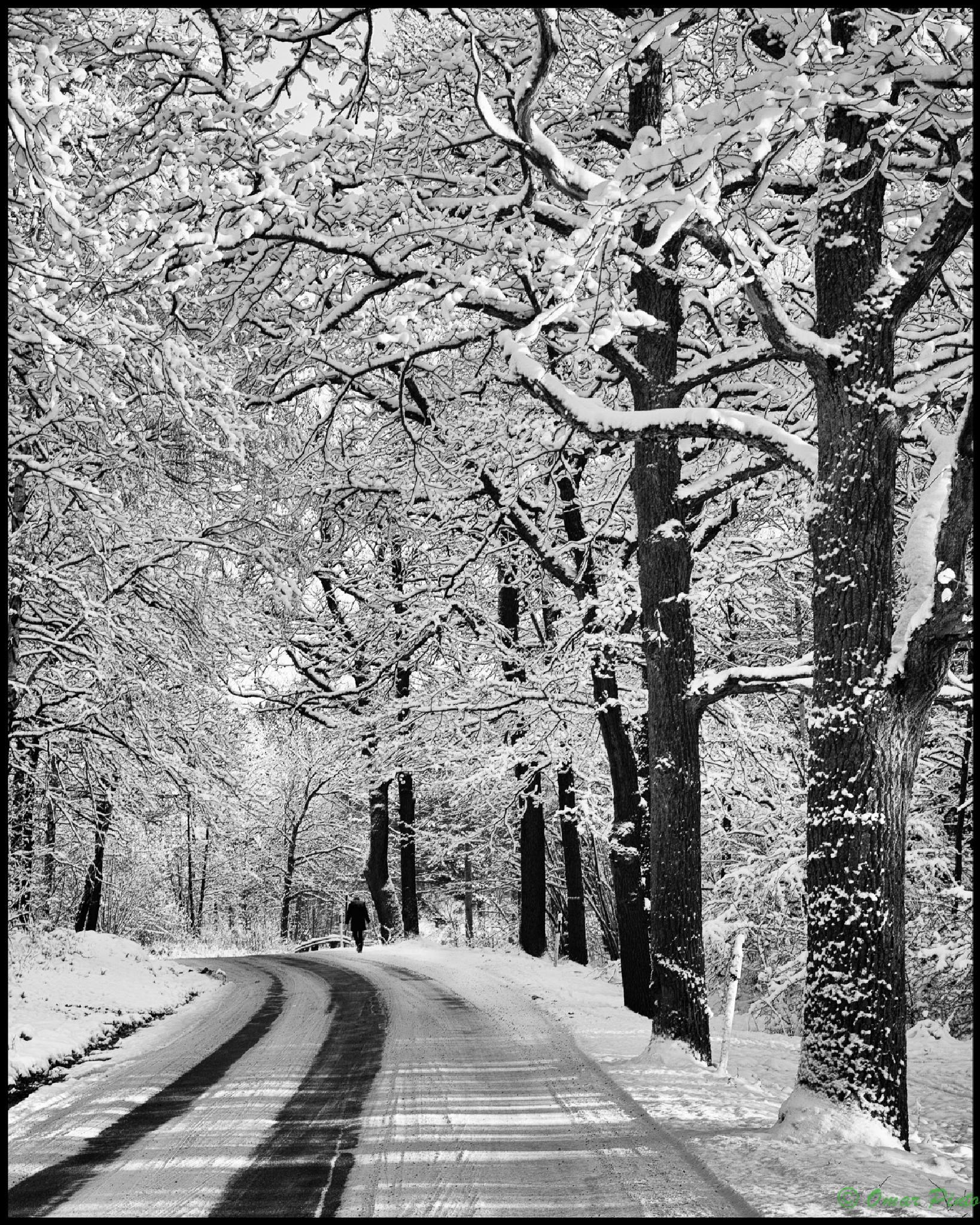 lonely winter walk by Omar Pinto Diaz
