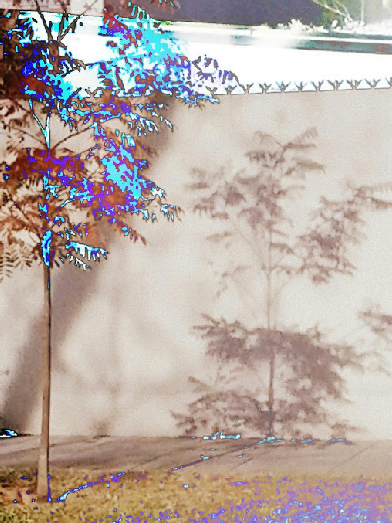 URBAN TREE by cantelegraciela