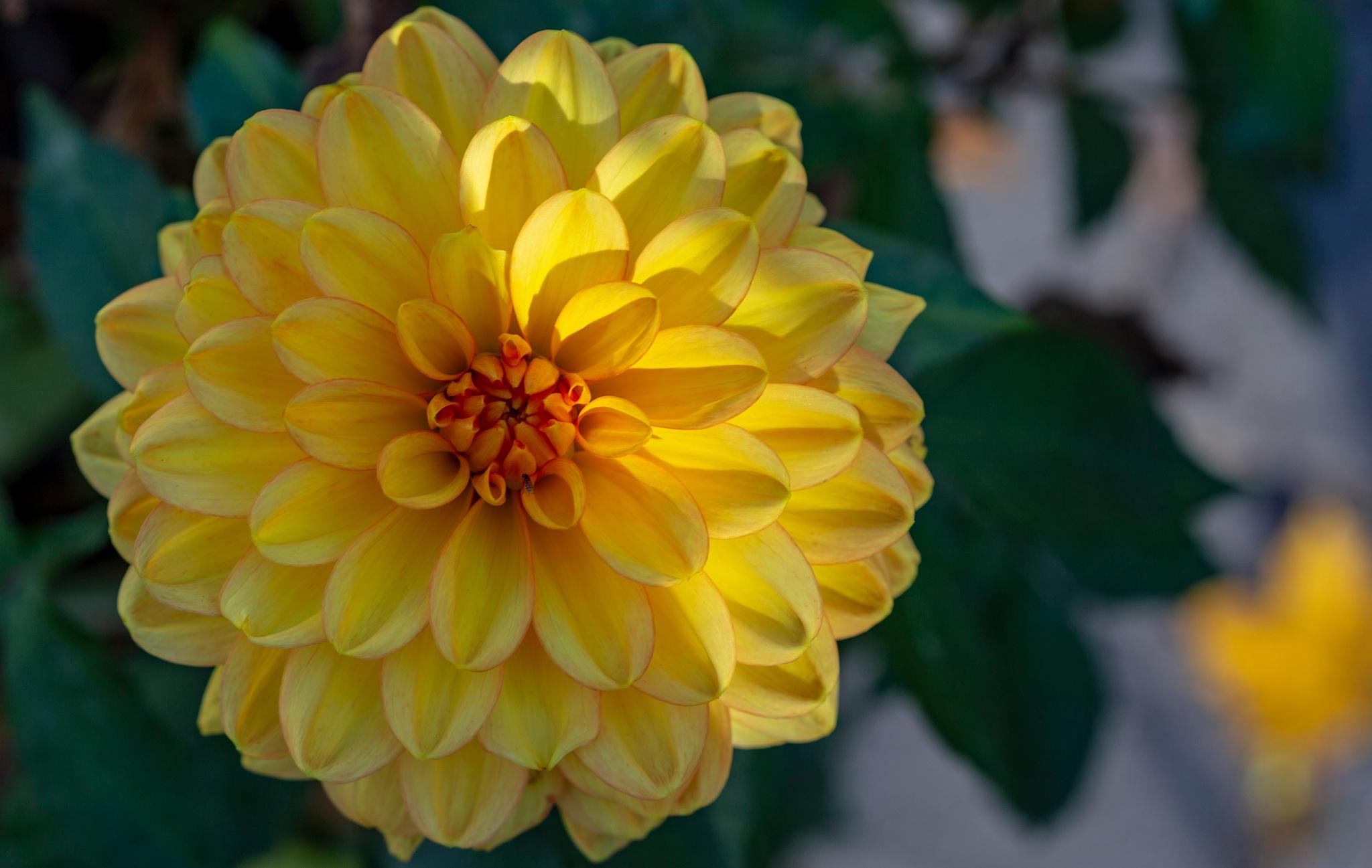 Still Blooming by carljan w carlsson