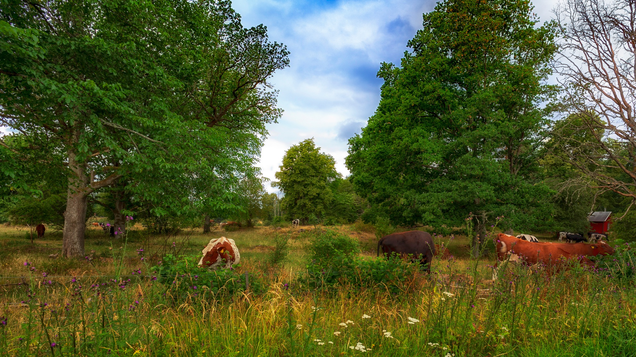 A Hot and Dry Summers Pasture II by carljan w carlsson