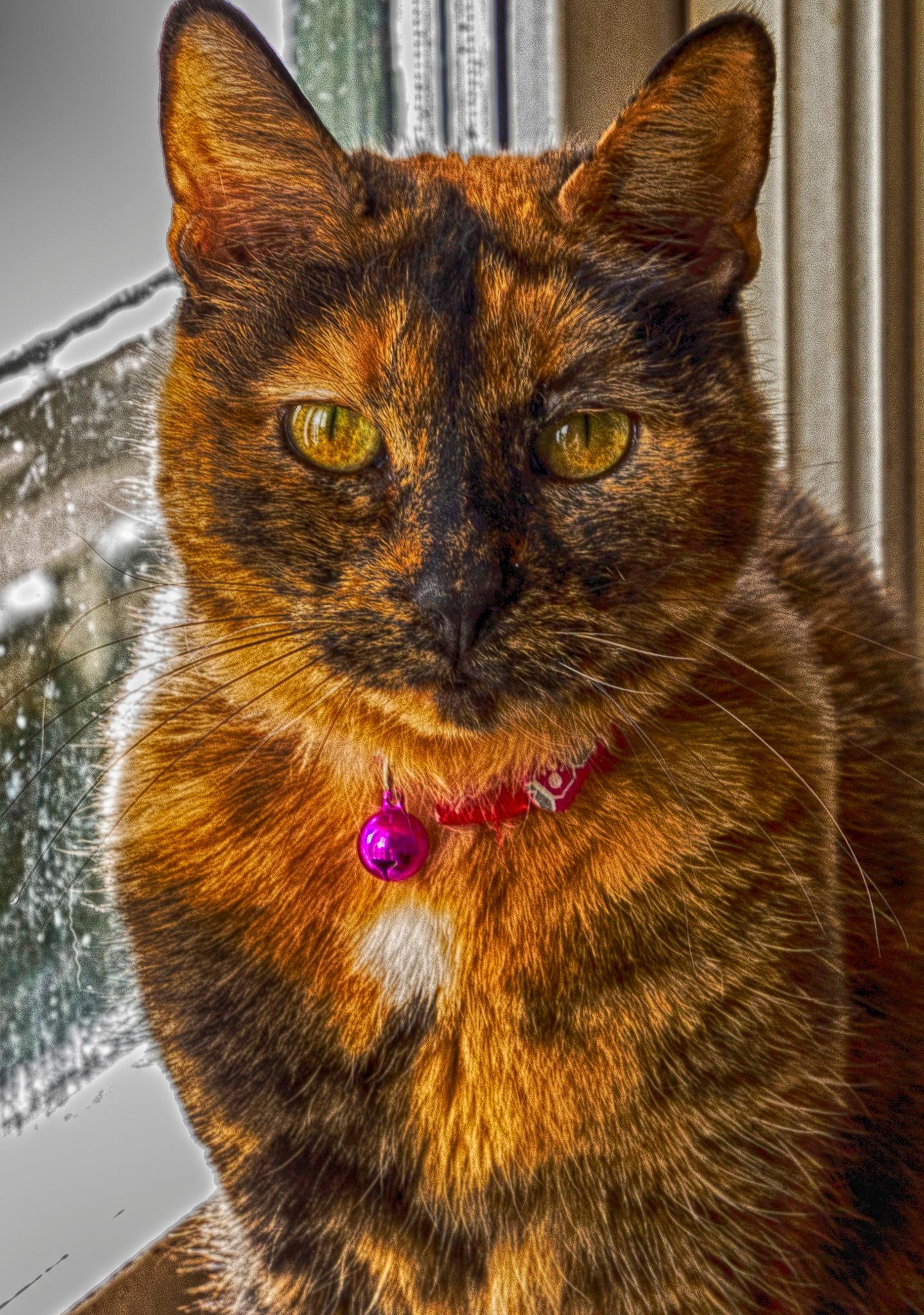When it's Snow Outdoors by carljan w carlsson