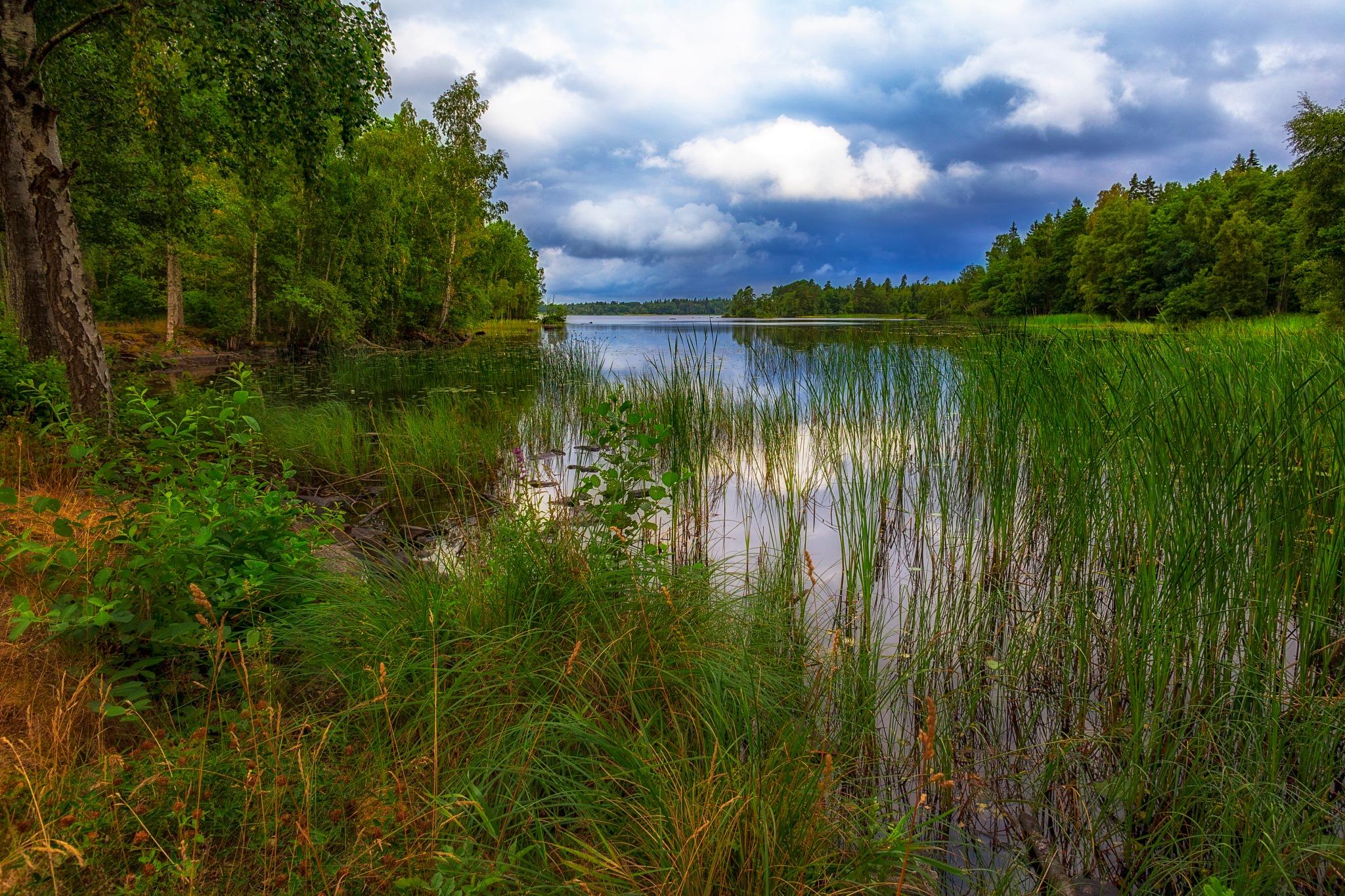 Summer Morning at the Lake by carljan w carlsson