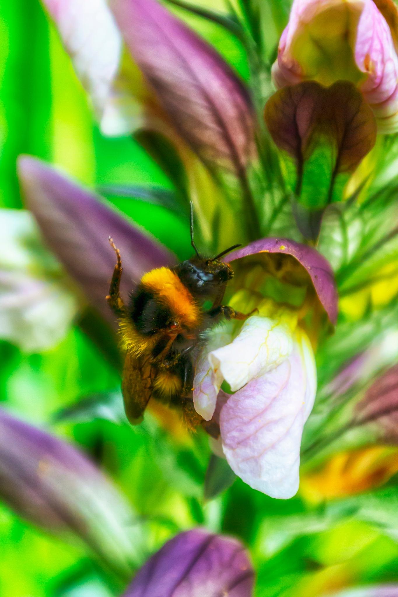 Acanthus and Bumblebee II by carljan w carlsson