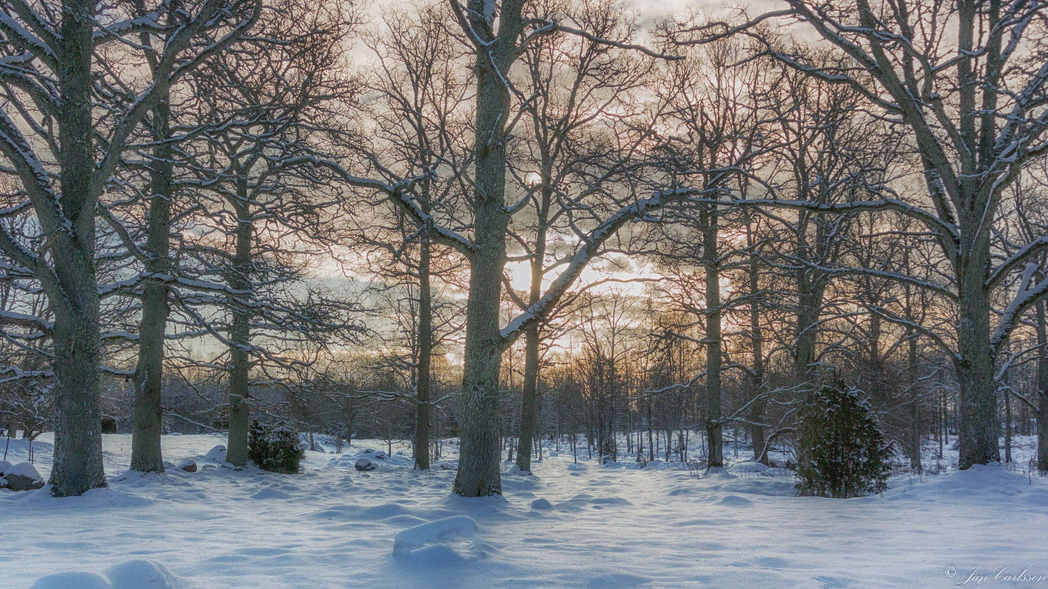 Into the Woods a Very Cold February Morning HDR by carljan w carlsson