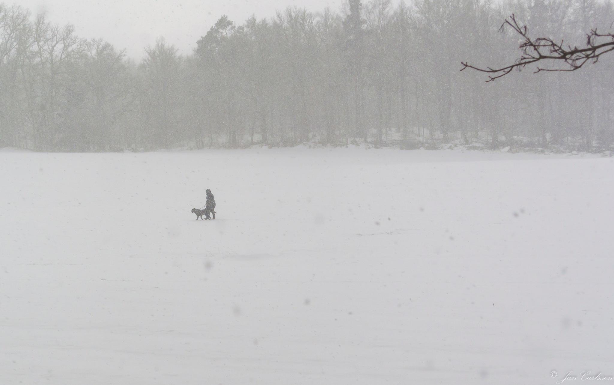 Snowstorm in March II by carljan w carlsson