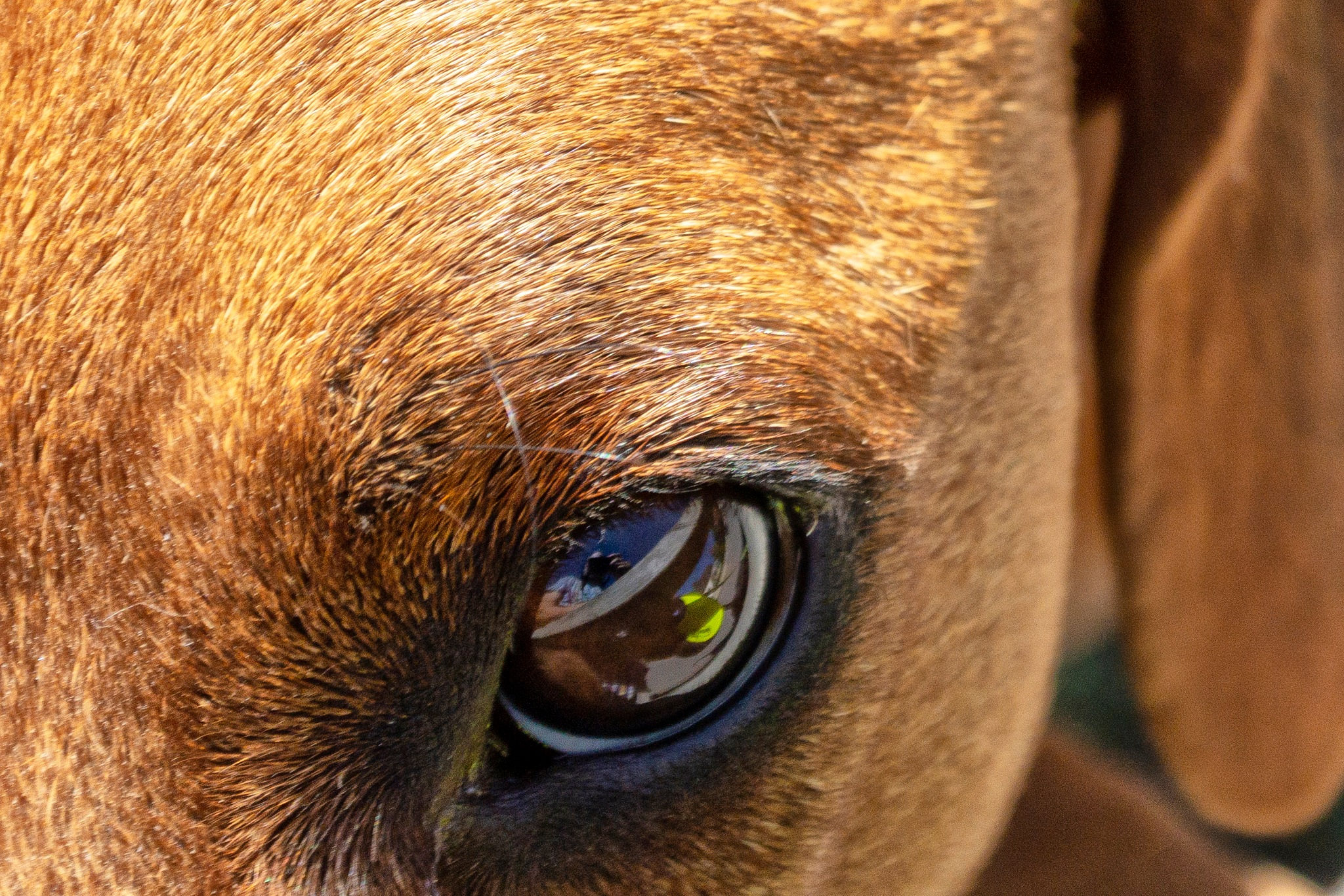 Reflections in a Dogs Eye by carljan w carlsson