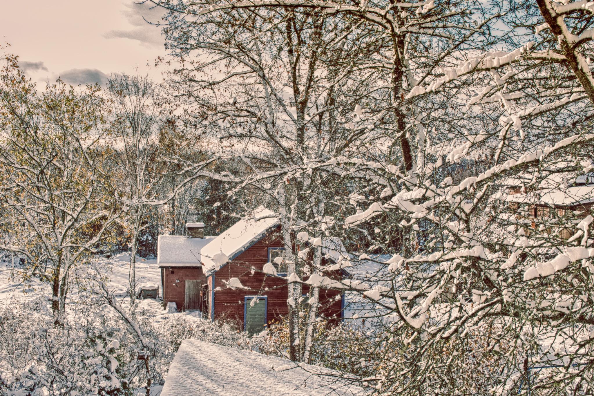 View from my window today by carljan w carlsson