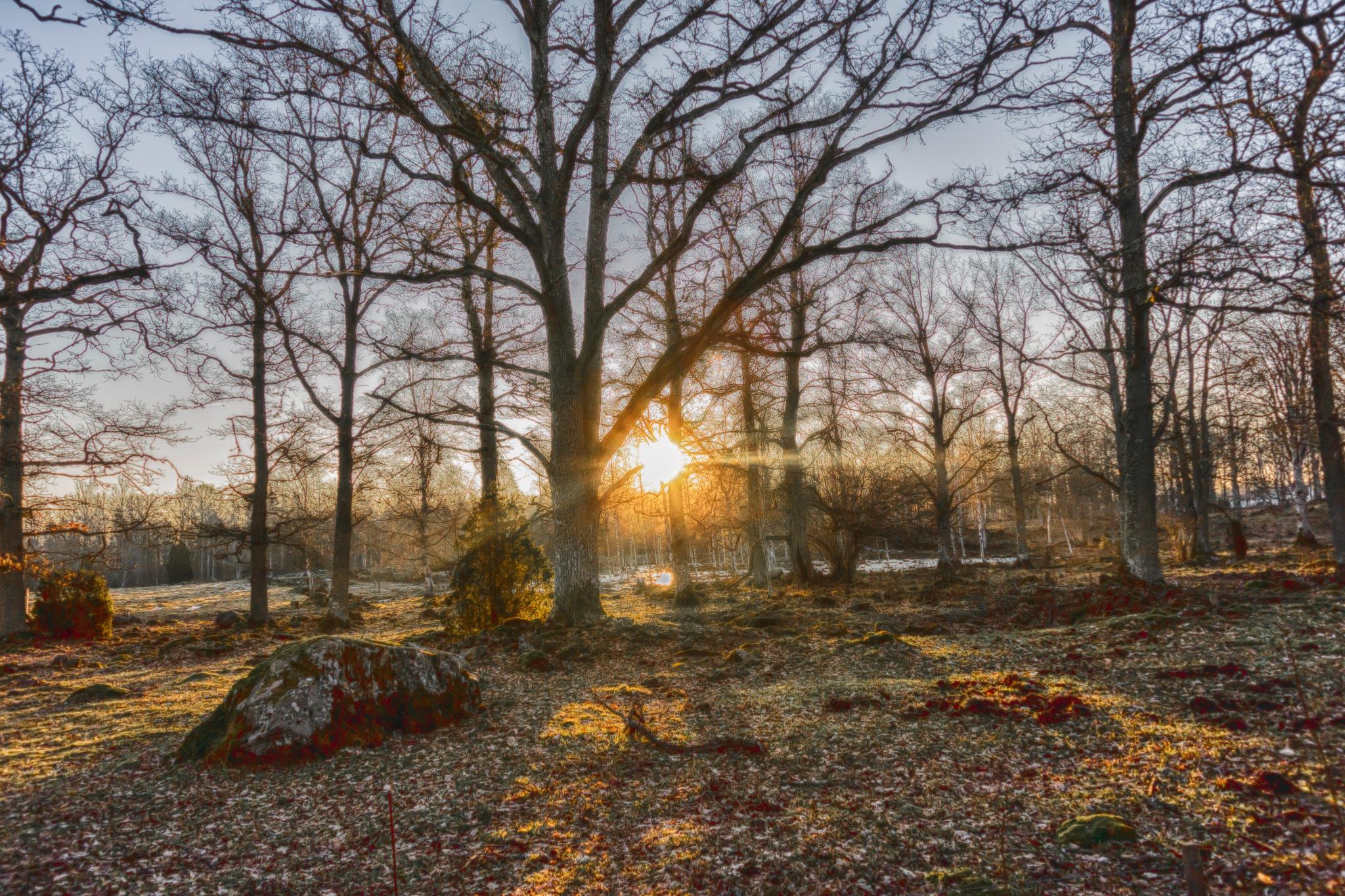 Early February Saturday Morning II by carljan w carlsson