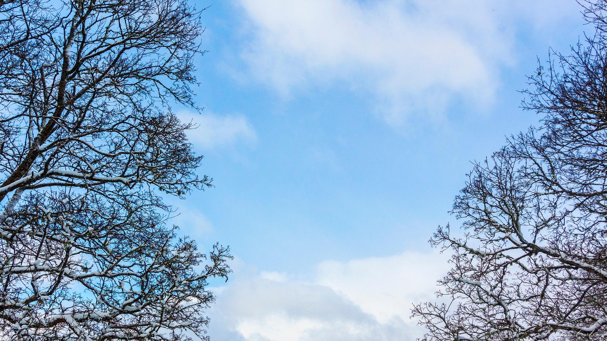 Winter - The Never Ending Story V by carljan w carlsson