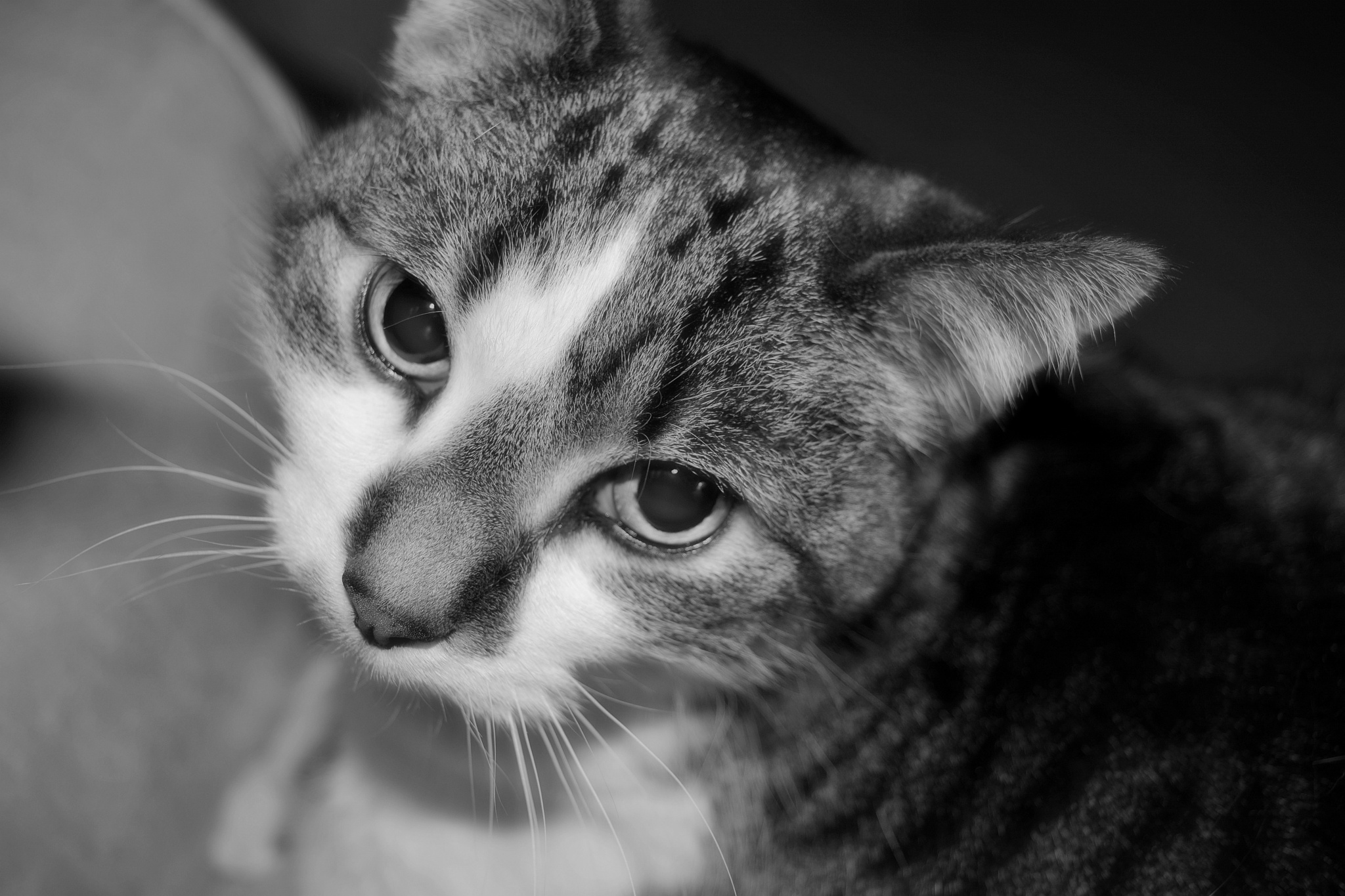 Mischievious Cat by photofly/Holly