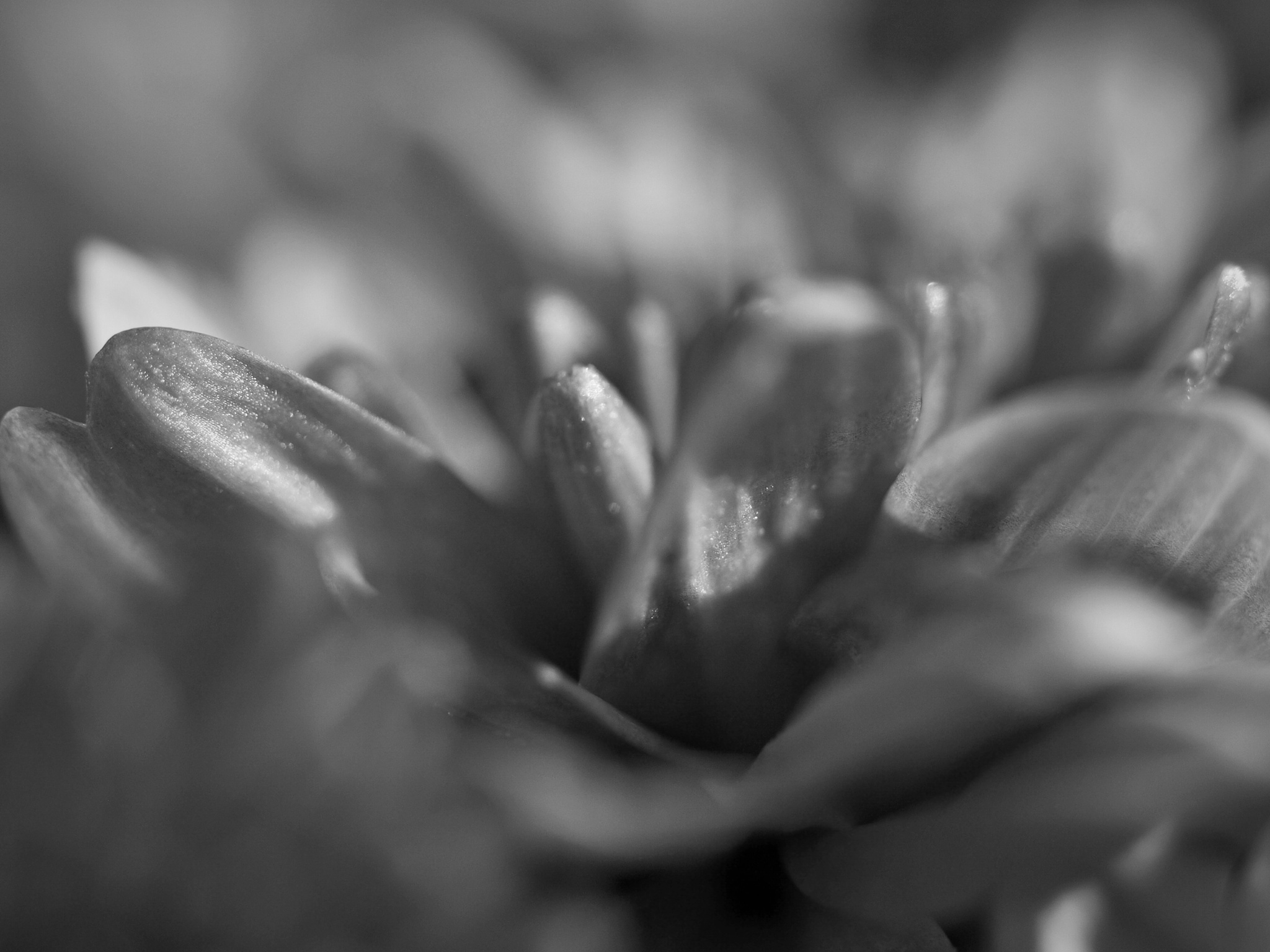 Flower Petals by photofly/Holly