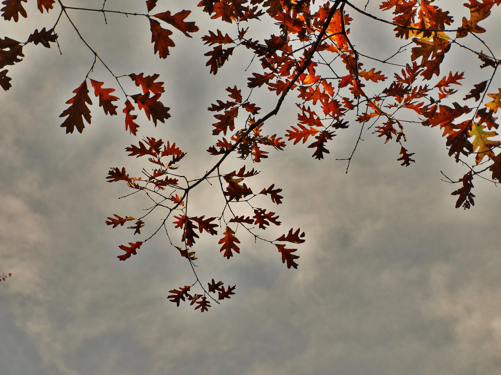 Autumn Sky by photofly/Holly