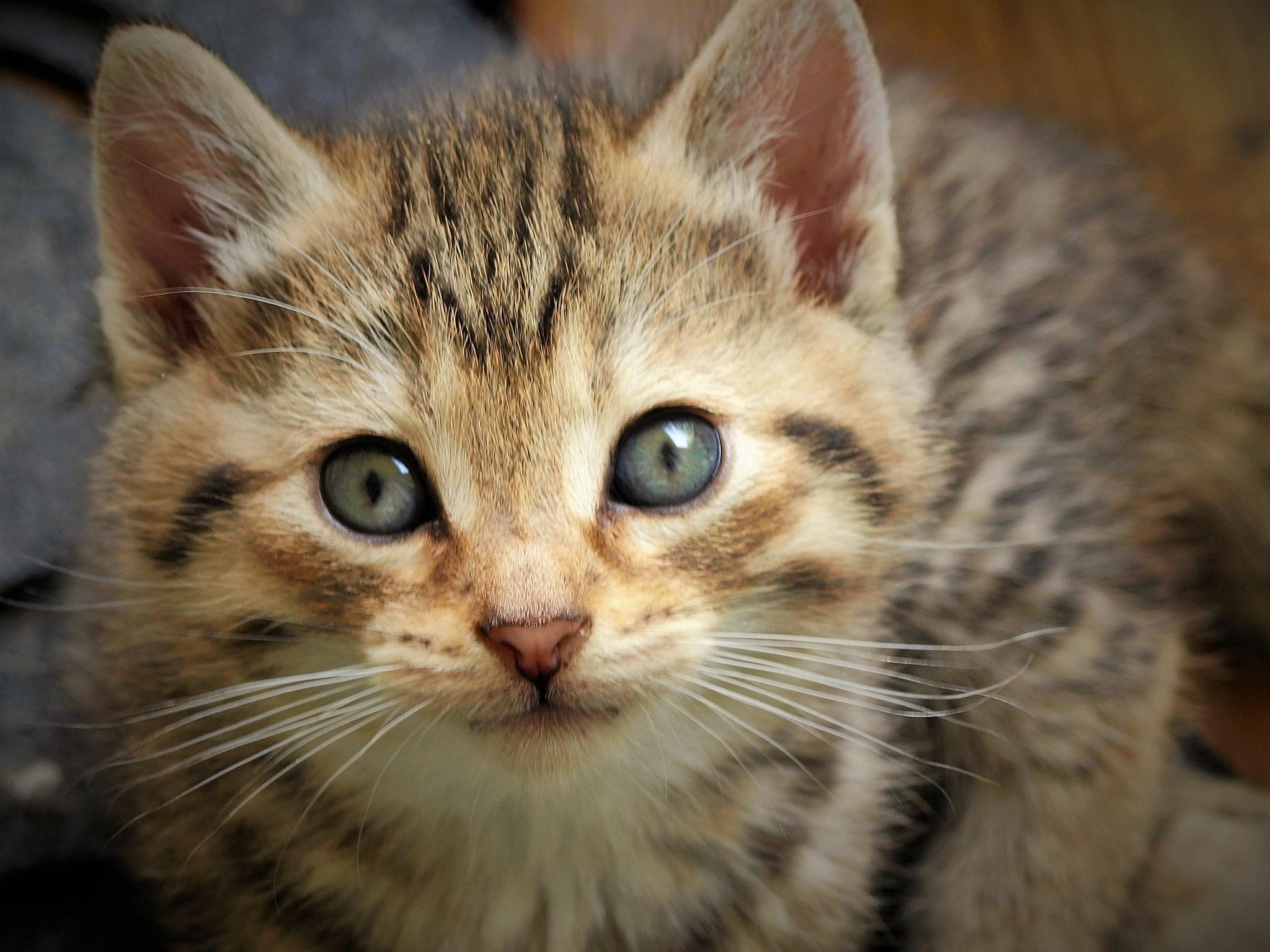 Photo in Animal #kitten #cat #animal #eyes #whiskers #iowa #random #nature #hope #trust
